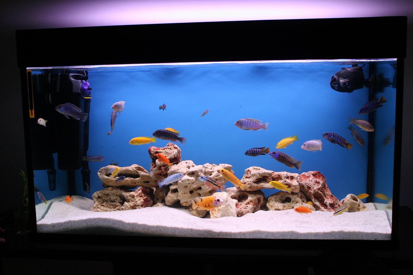 Fish tank home made decorations 88391 mission spot dorrrrrrr for Fish tank video