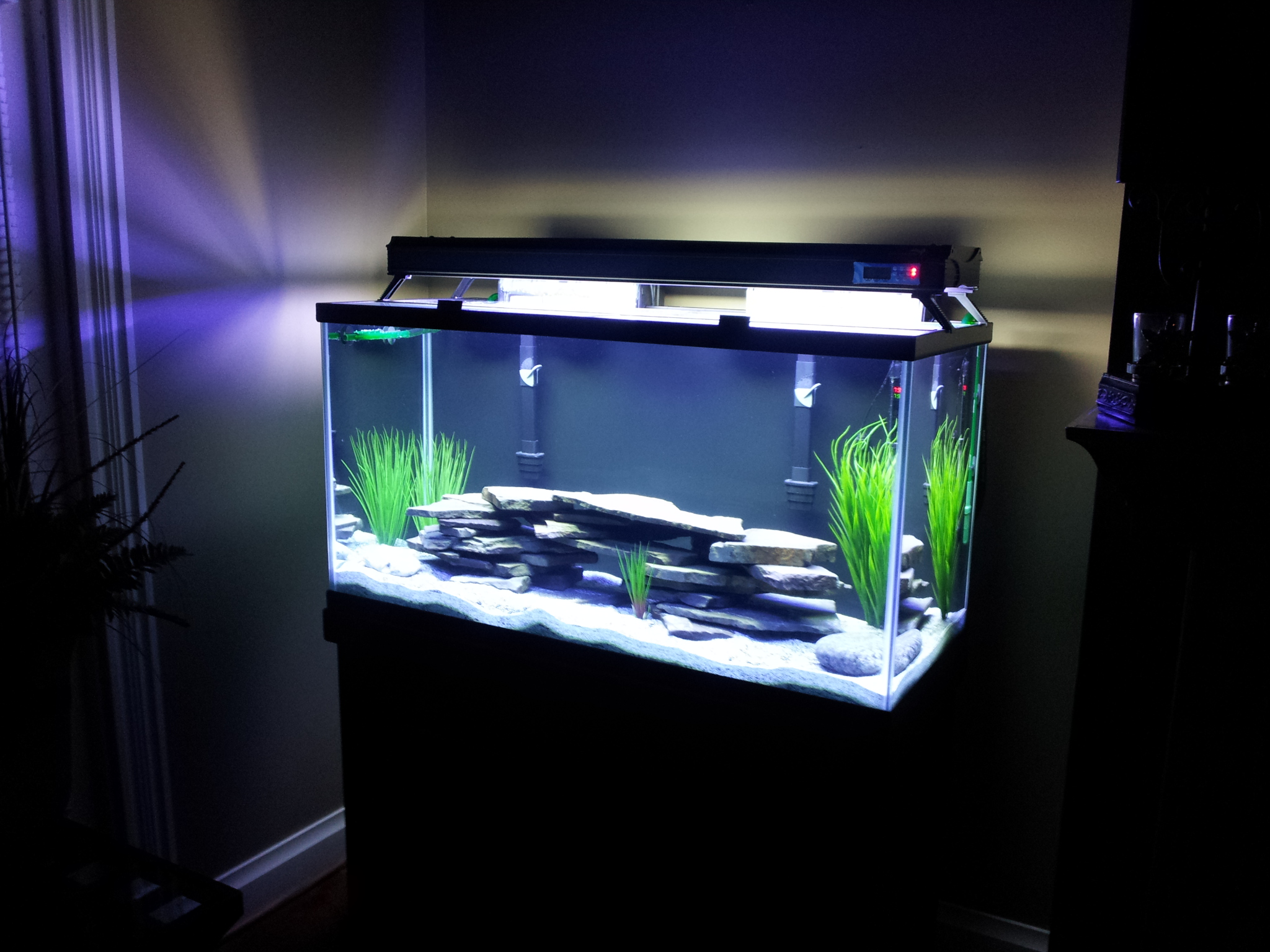 Bow Front Glass Aquarium
