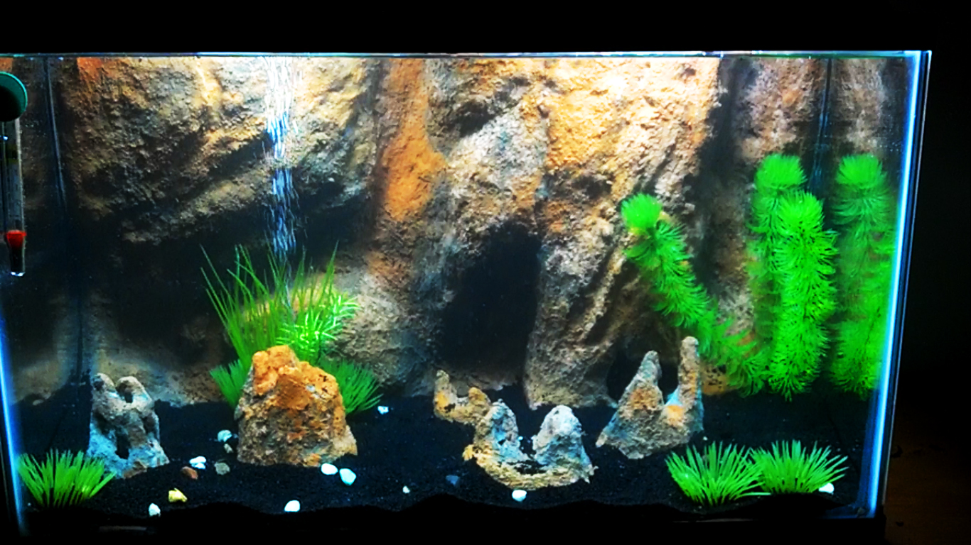 10 gallon aquarium background 1000 aquarium ideas