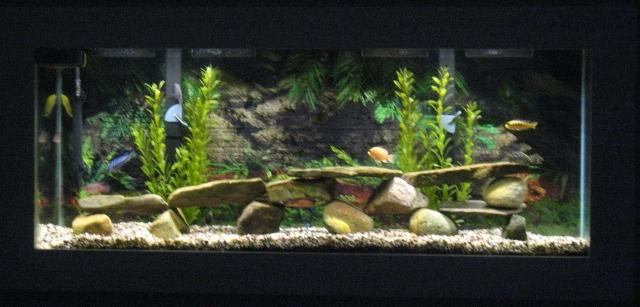 cichlids.com: My 55 gallon African Cichlid Tank 10 Gallon Fish Tank Ideas