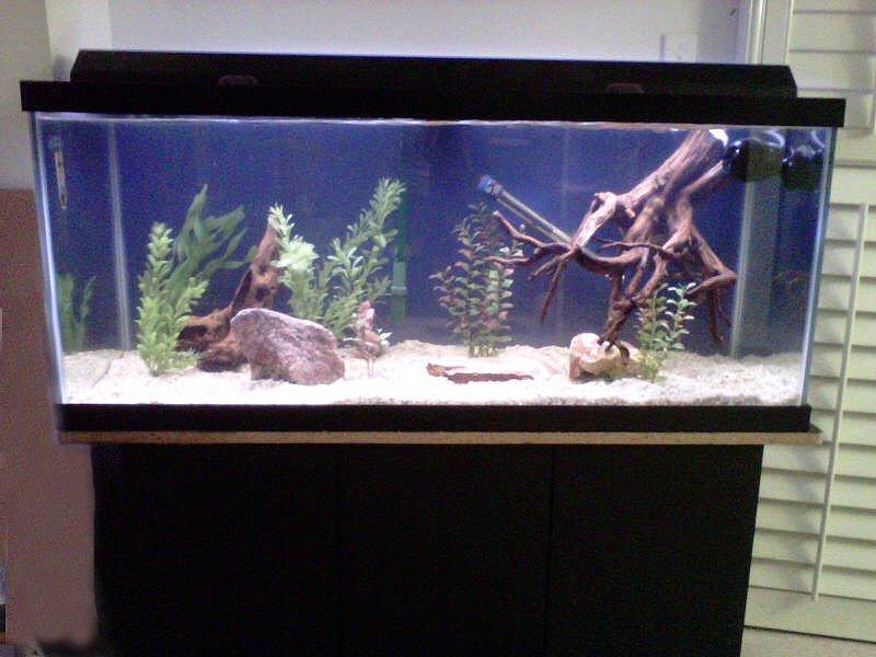 Fish tank fish aquariums for sale autos weblog for Fish tank divider 75 gallon