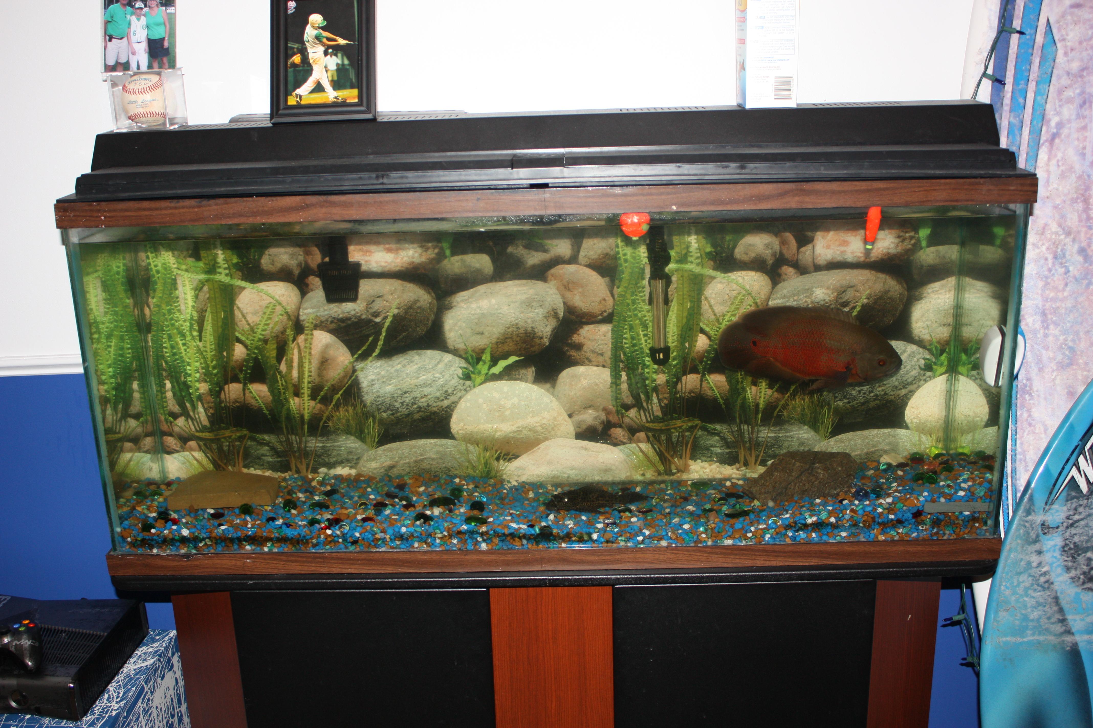 10 gallon fish tank oscar oscar tank 2017 fish tank for 10 gallon tank fish
