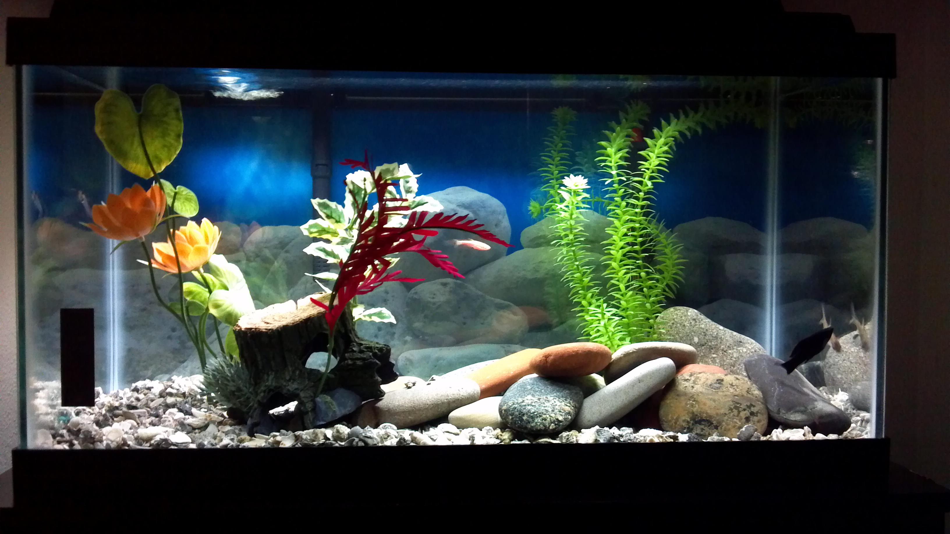 Tank examples for Fish tank full movie