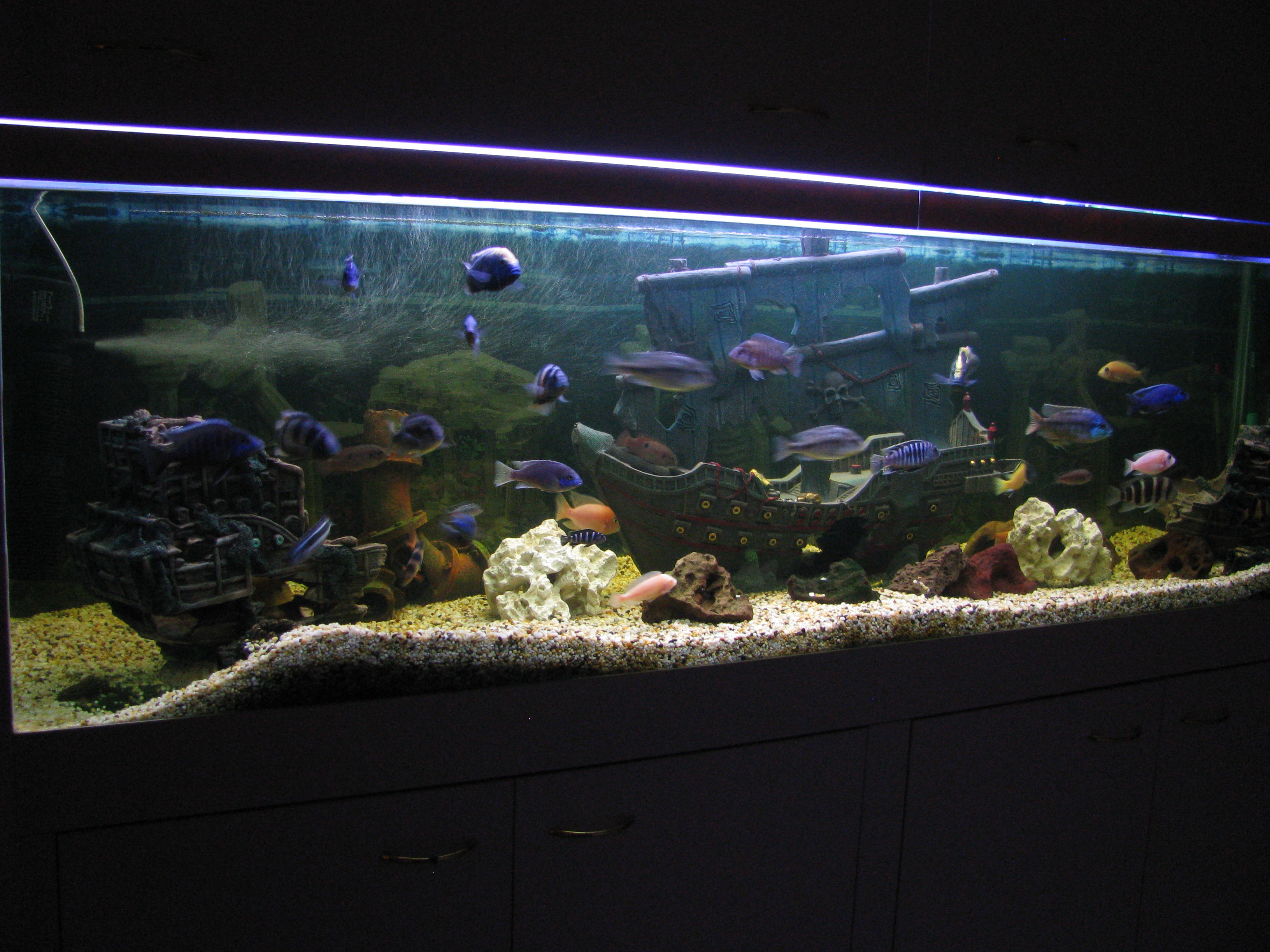 My in the wall fish tank for Wall fish tanks