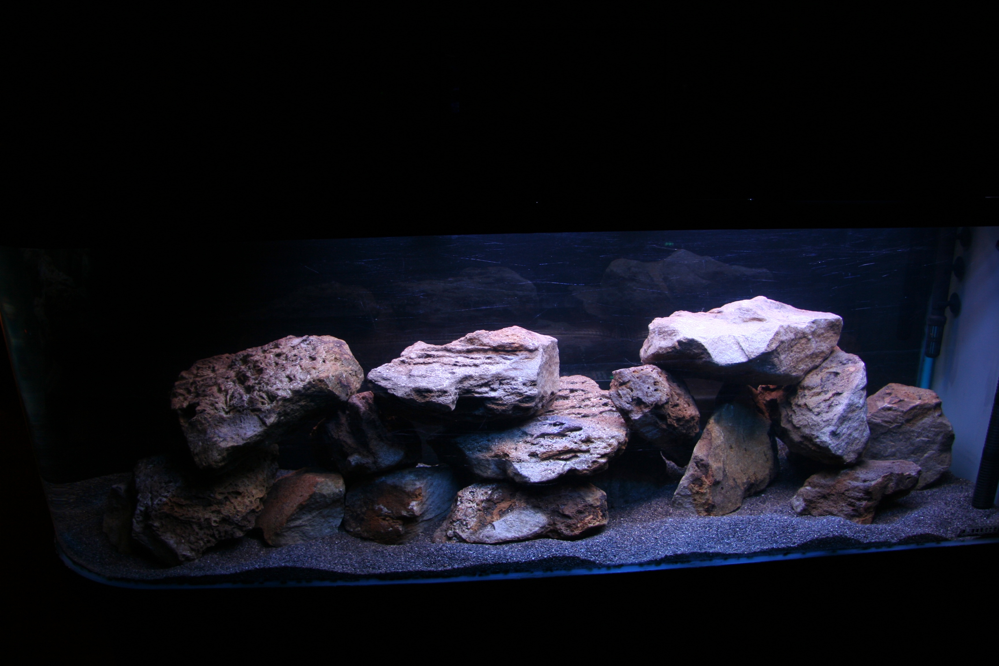 Long finned Oscar as well 298317 Strange Reaction To A New Addition as well Collectionbdwn Black Discus Fish moreover Viewtopic likewise Oscars Tank. on oscar cichlid forum