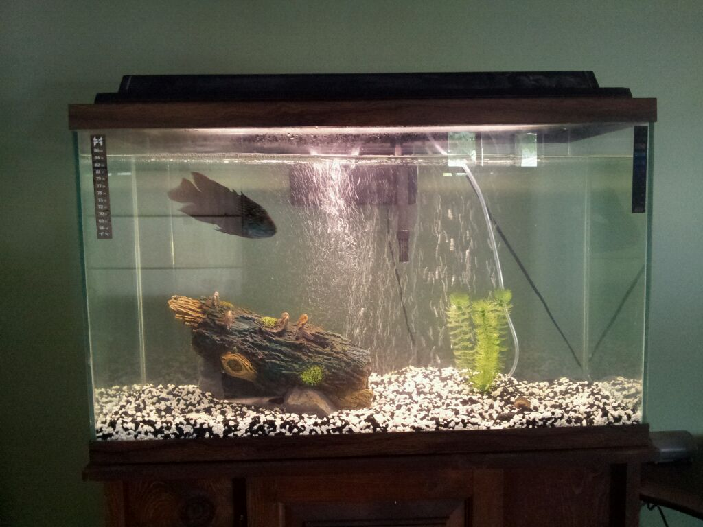 30 gallon fish tank 75 aqua 30 gallon tower aquarium Thirty gallon fish tank