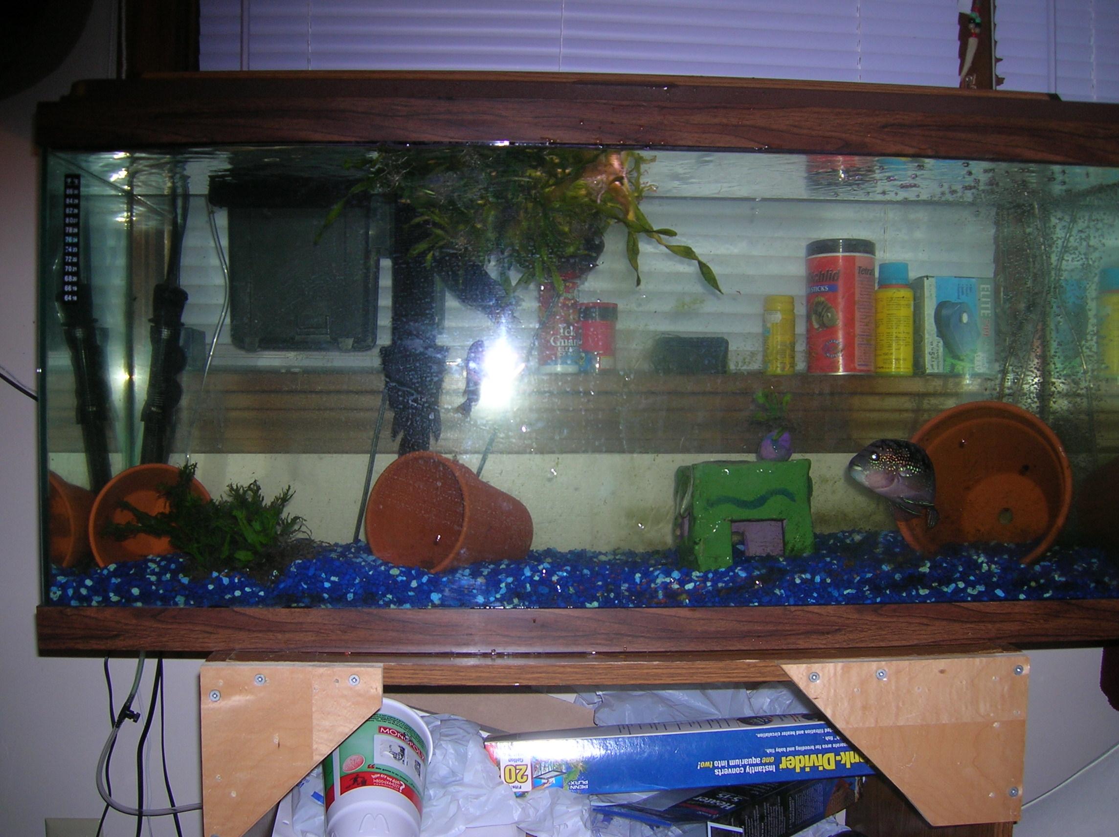 30 gallon fish tank in litres tank for 30 gallon fish tank kit