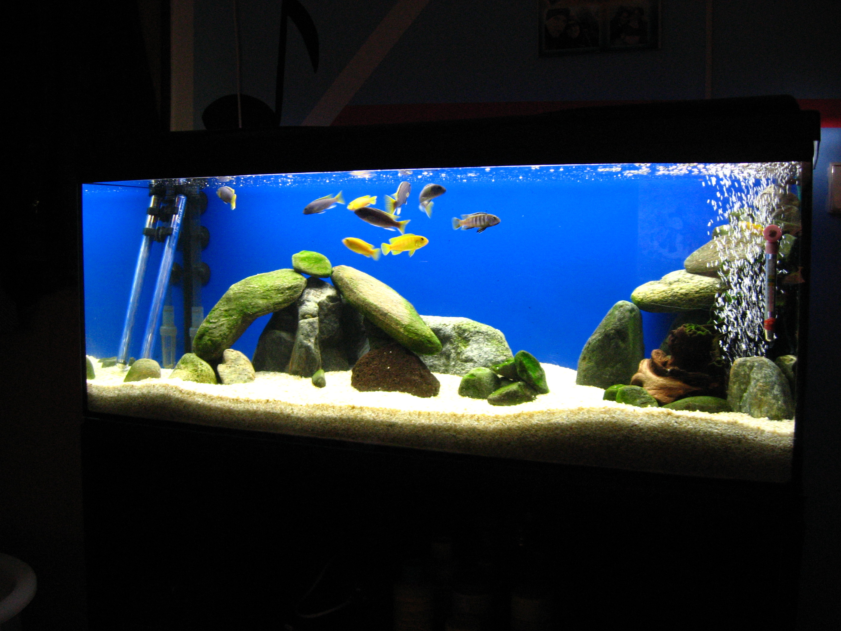 Tank examples for Standard fish tank sizes