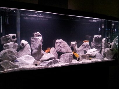 Cichlids Com Tank Examples My Brother 55 Gallon Project