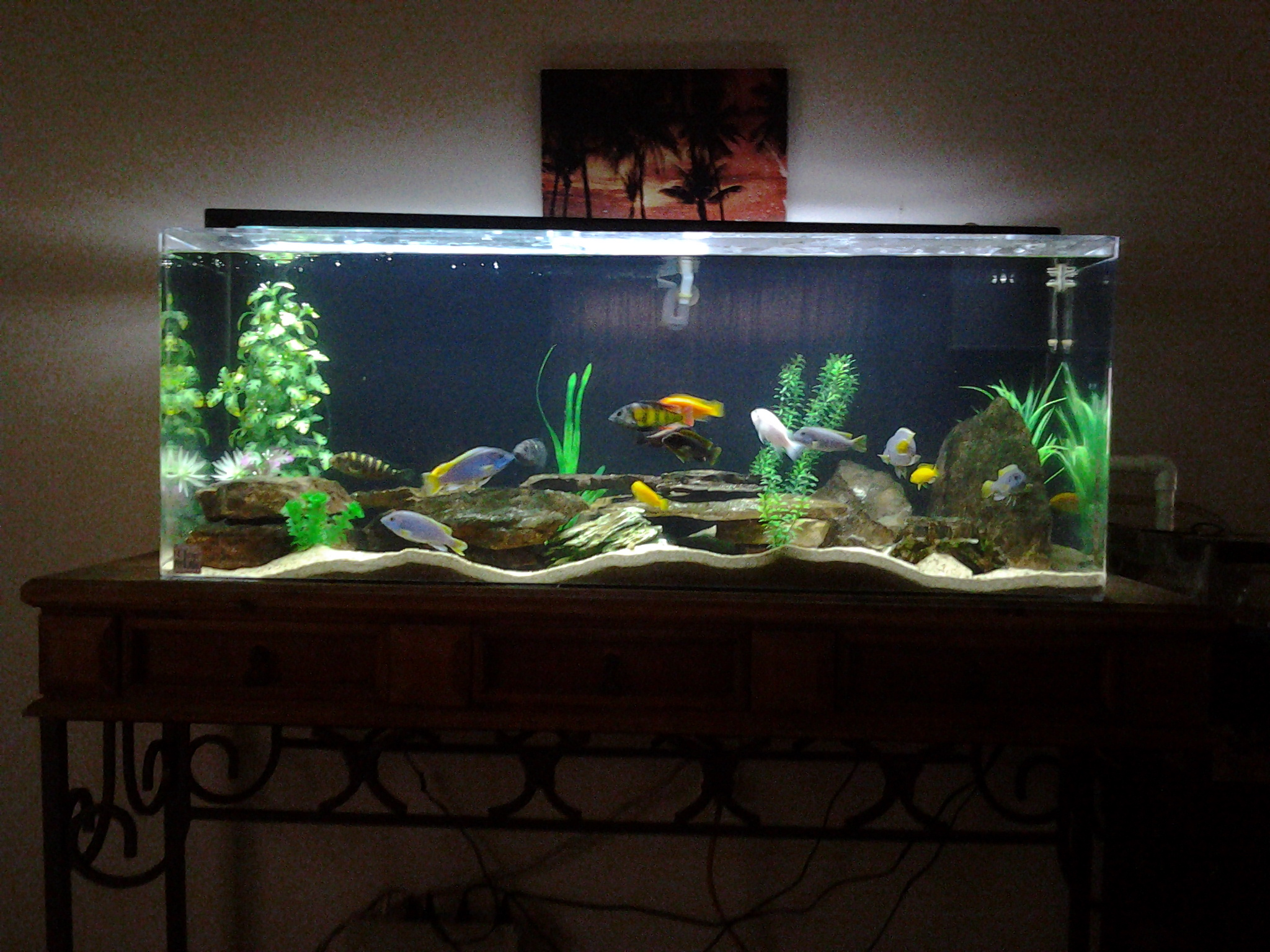 New 65 gallon acrylic tank for 65 gallon fish tank