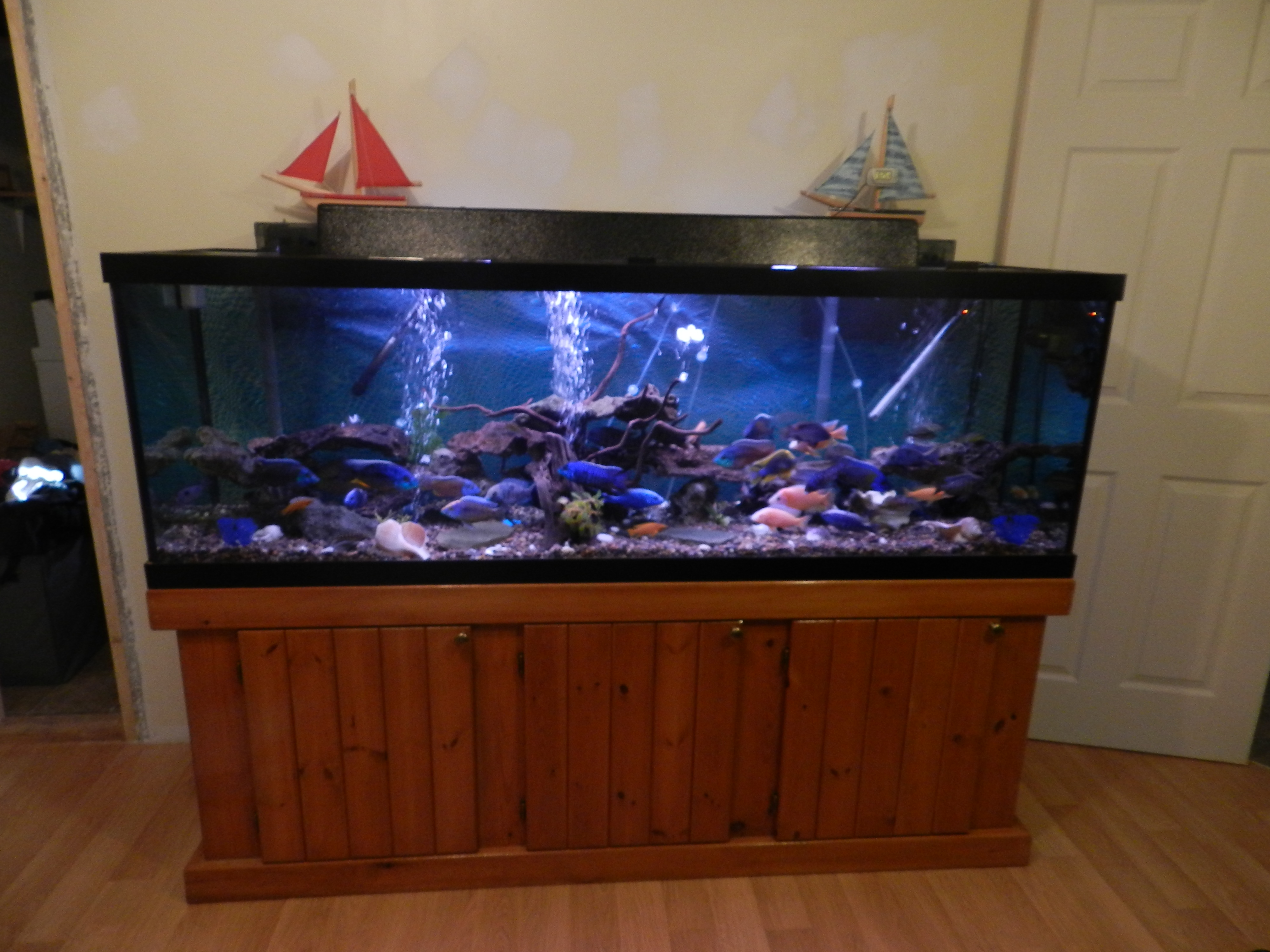 135 gallon show tank for Fish tank show