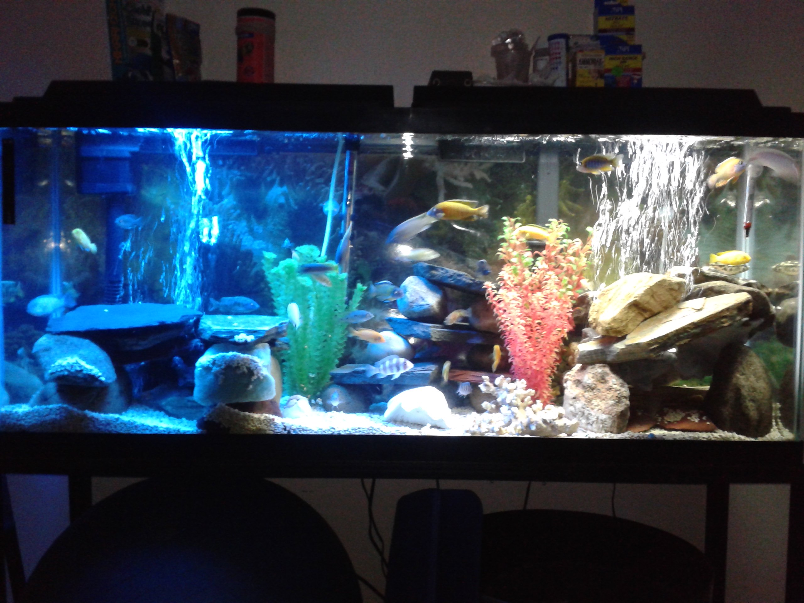 Tank examples african cichlids for Cichlid fish tank