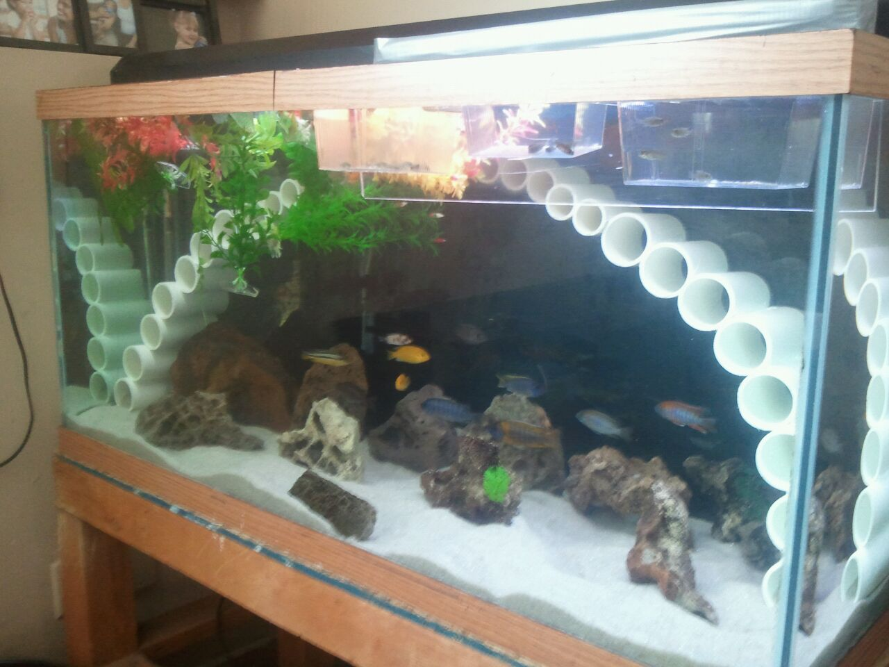 cichlid tank decorations quotes