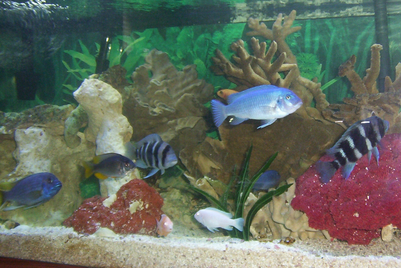 Id The Big Blue Fish Please