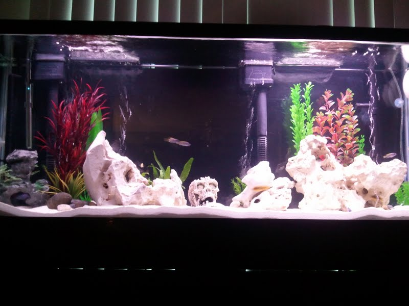 Tank examples new 55 gallon setup for 55 gallon aquarium decoration ideas