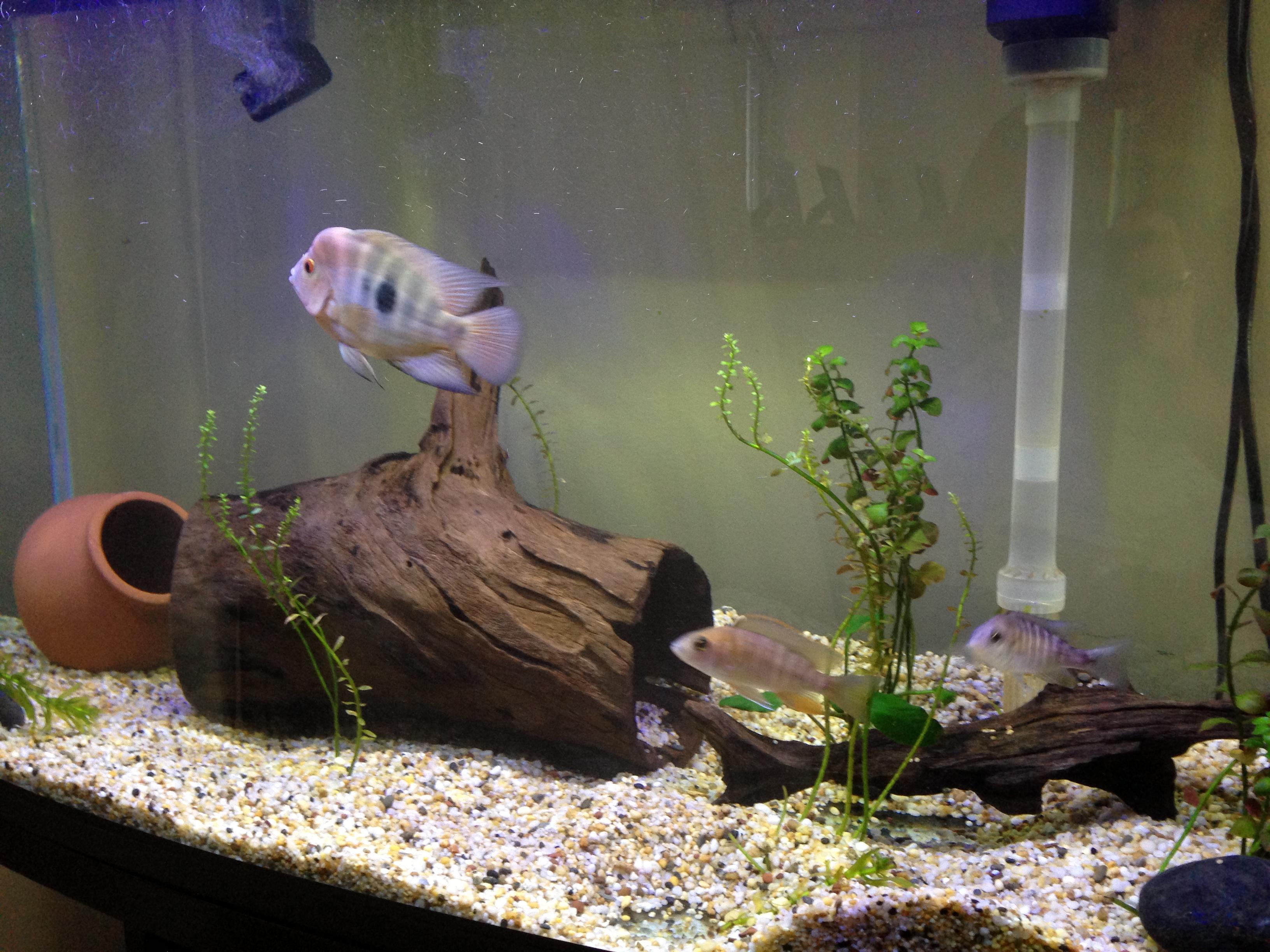 cichlids.com: Tank examples
