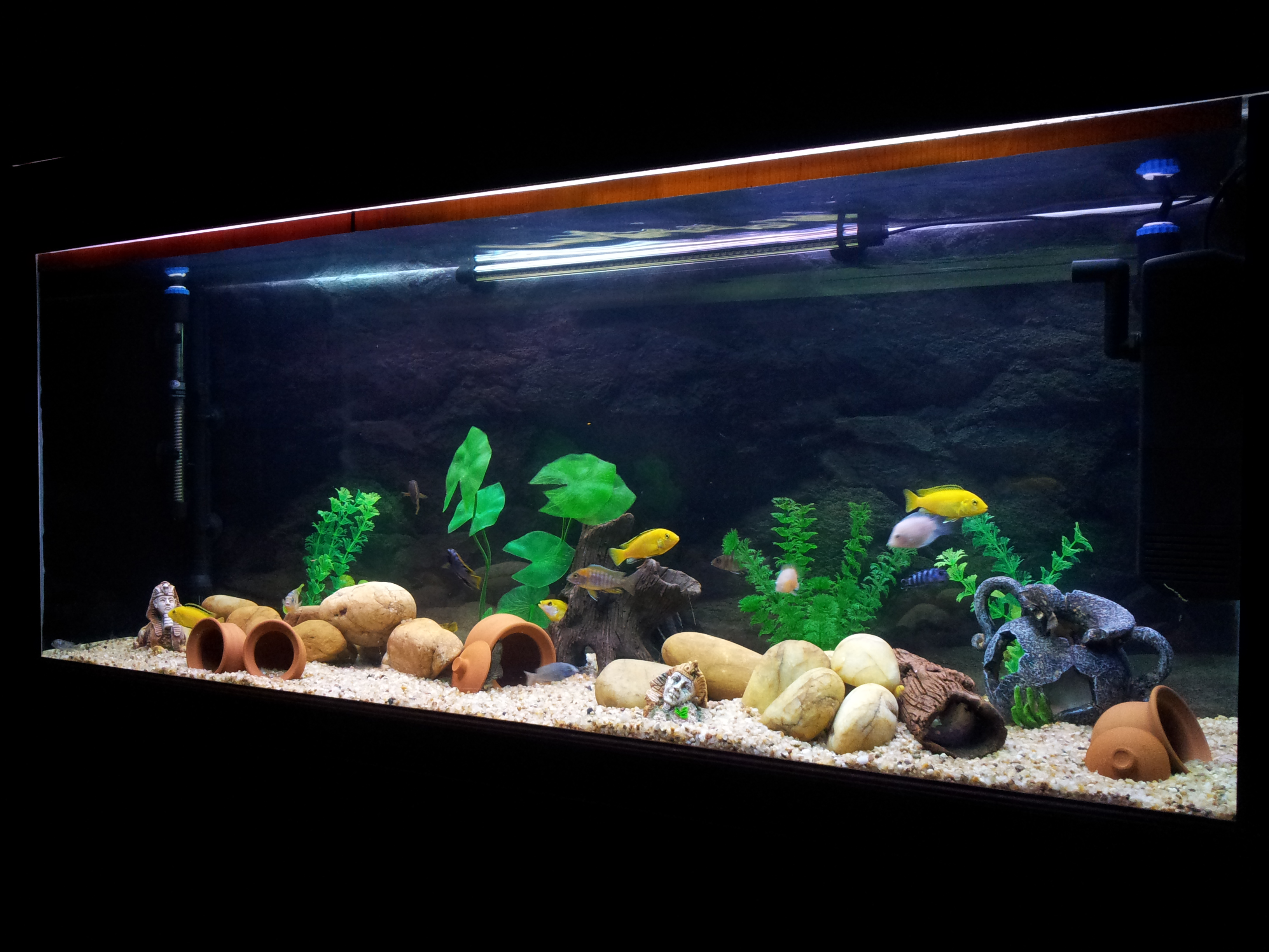 Tank examples my aquarium 240 liter for Aquarium 120x40x50