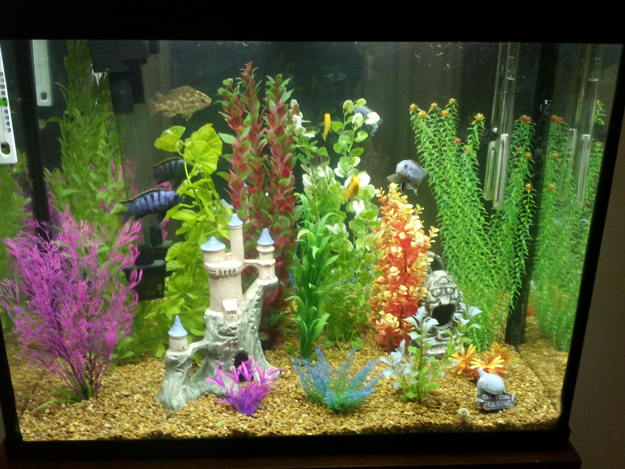 Artificial silk aquarium plants 1000 aquarium ideas for Fake artificial aquarium fish tank