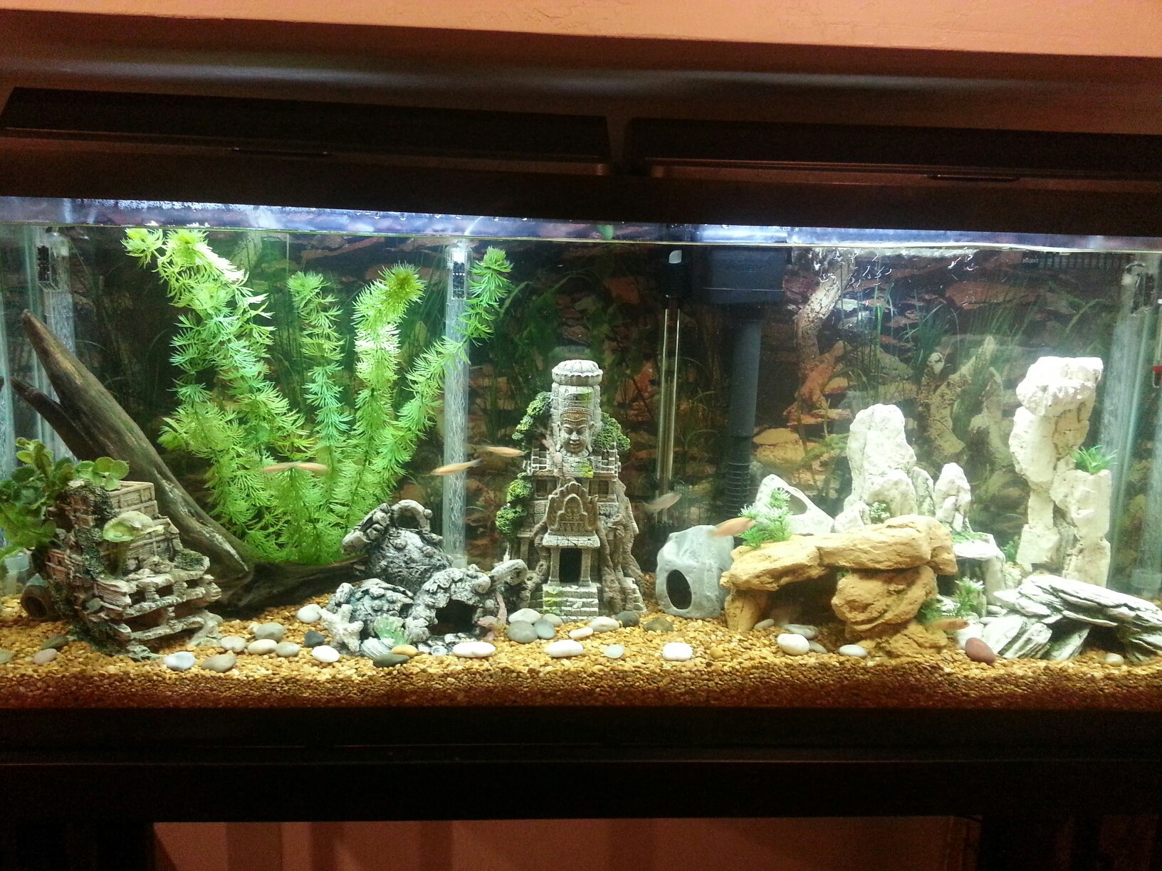 Tank setups for oscars furthermore Player in addition Player also Bluegrass Aquatics Review furthermore Fish And Aquariums. on oscar cichlids in 55 gal tank