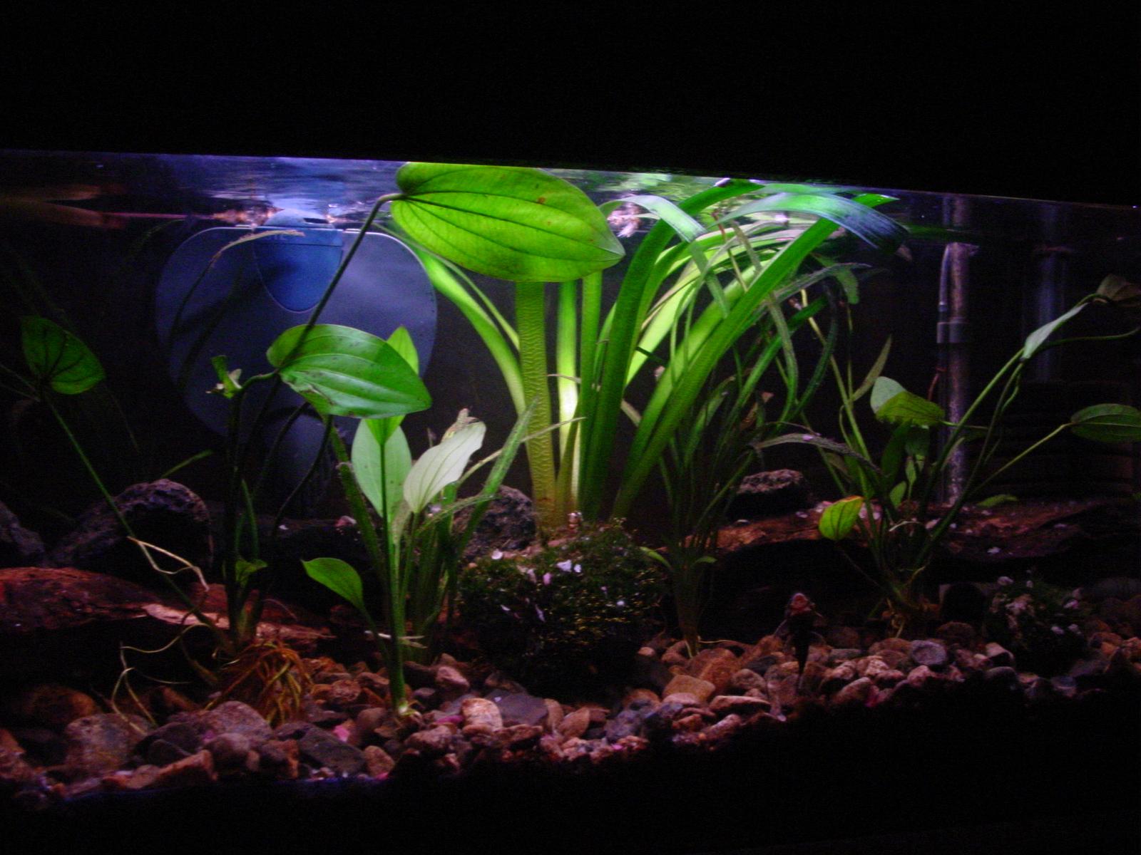 My Planted Aquarium Imod Pictures Of Planted Aquariums aquarium