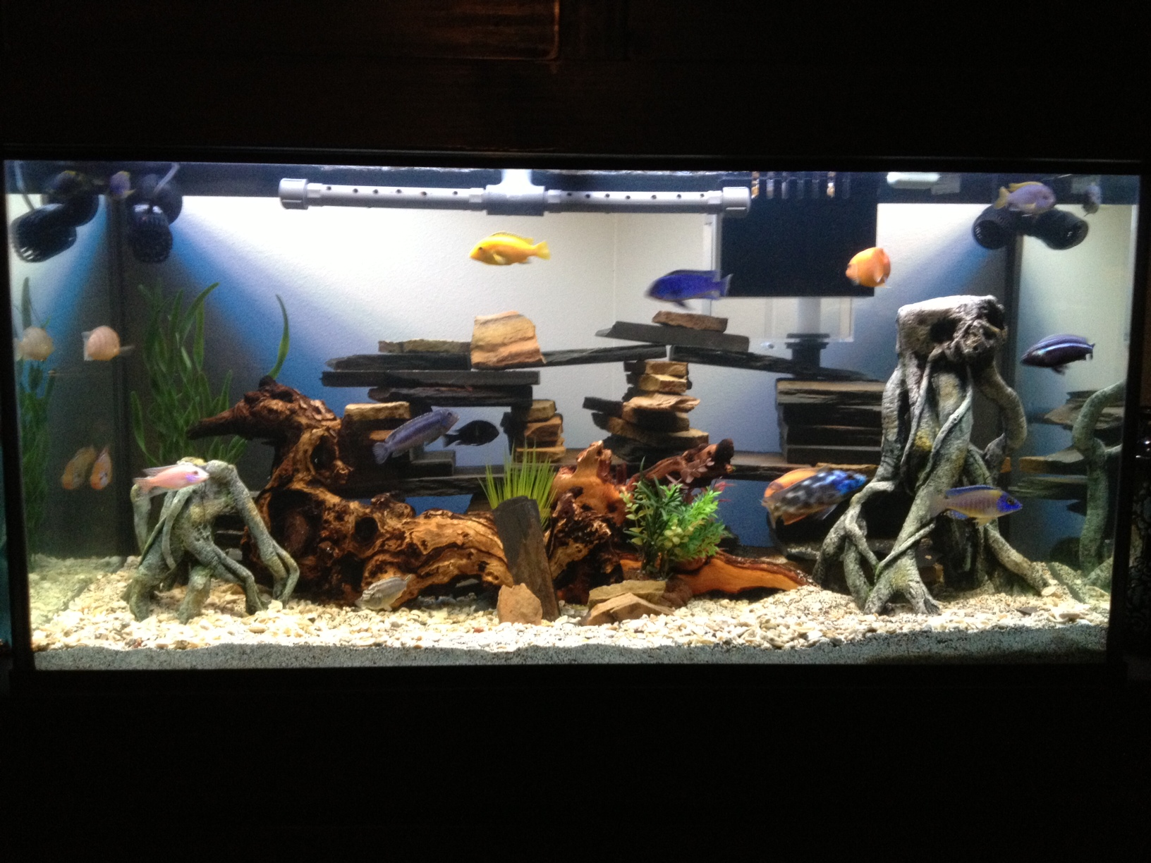 20 gallon tank in cm tank examples 20 for How many gallons in a fish tank calculator