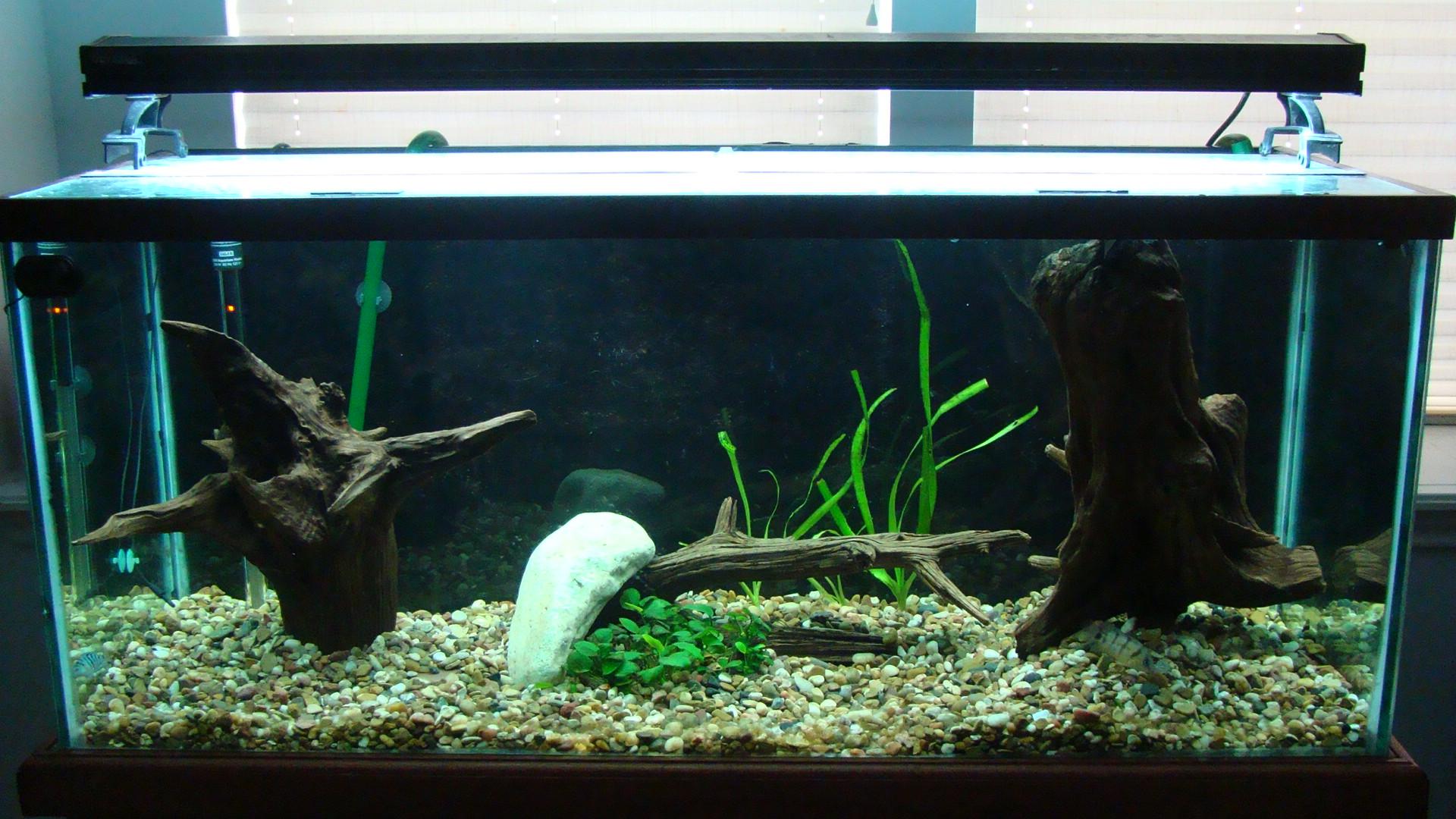 Piranha Fish Tank Piranha Fish Tank Setup 75g