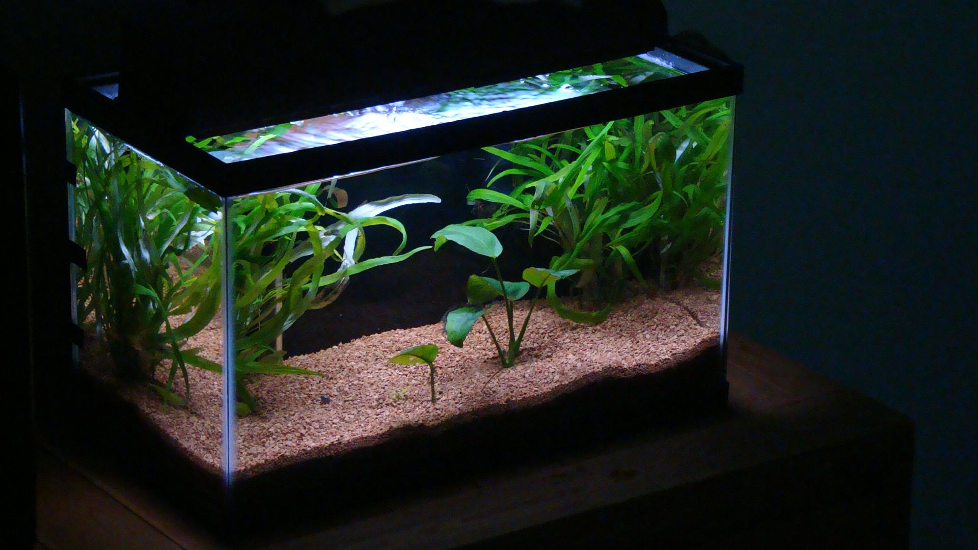 10g planted red cherry shrimp tank for Idee deco aquarium