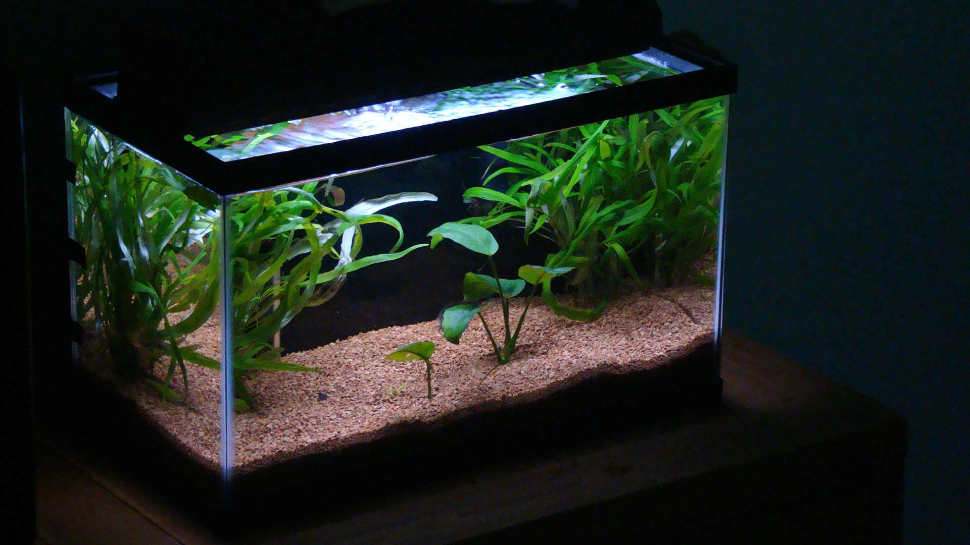 10g planted red cherry shrimp tank. Black Bedroom Furniture Sets. Home Design Ideas