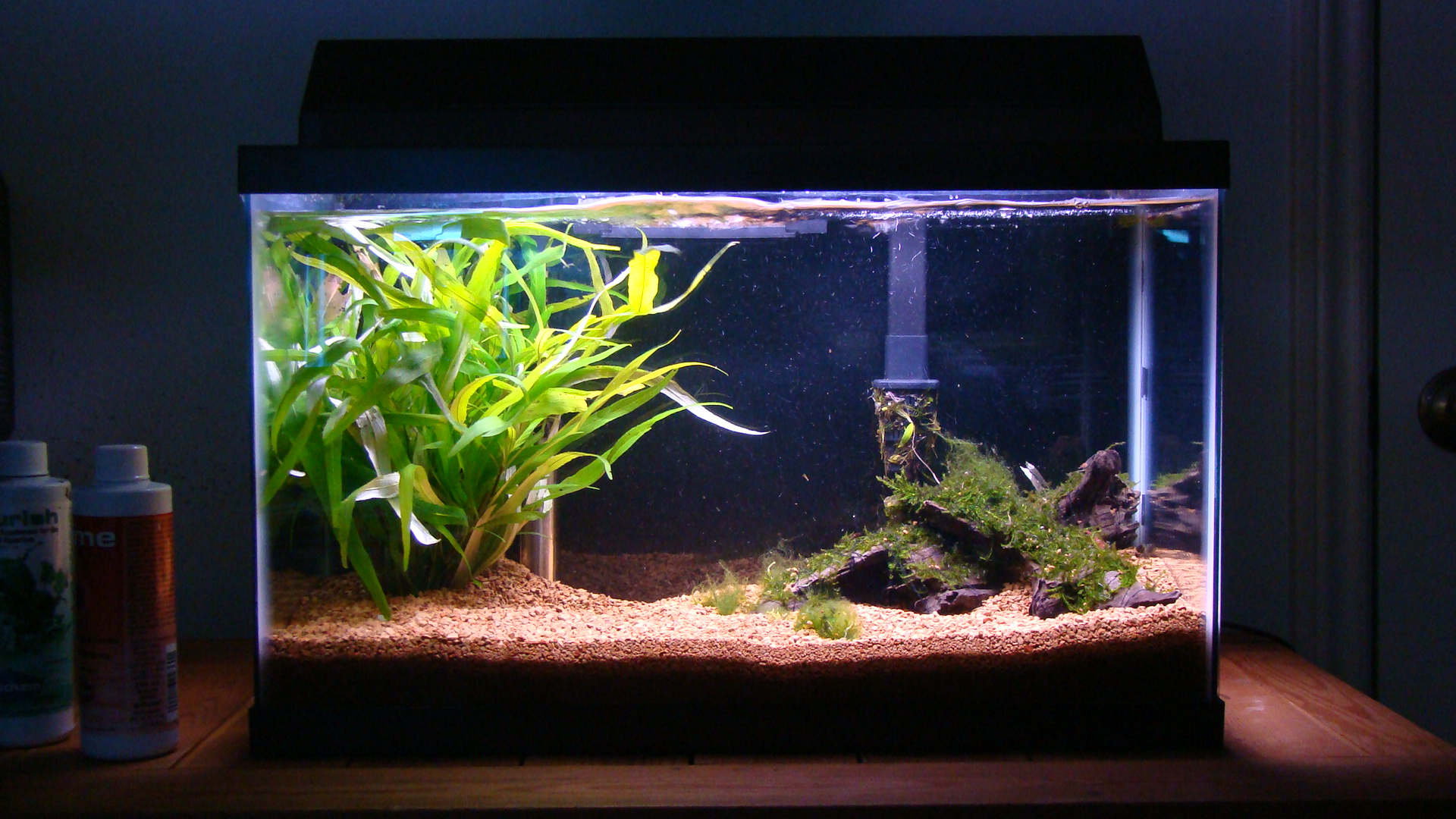 cichlids com  10g planted crystal red shrimp tank