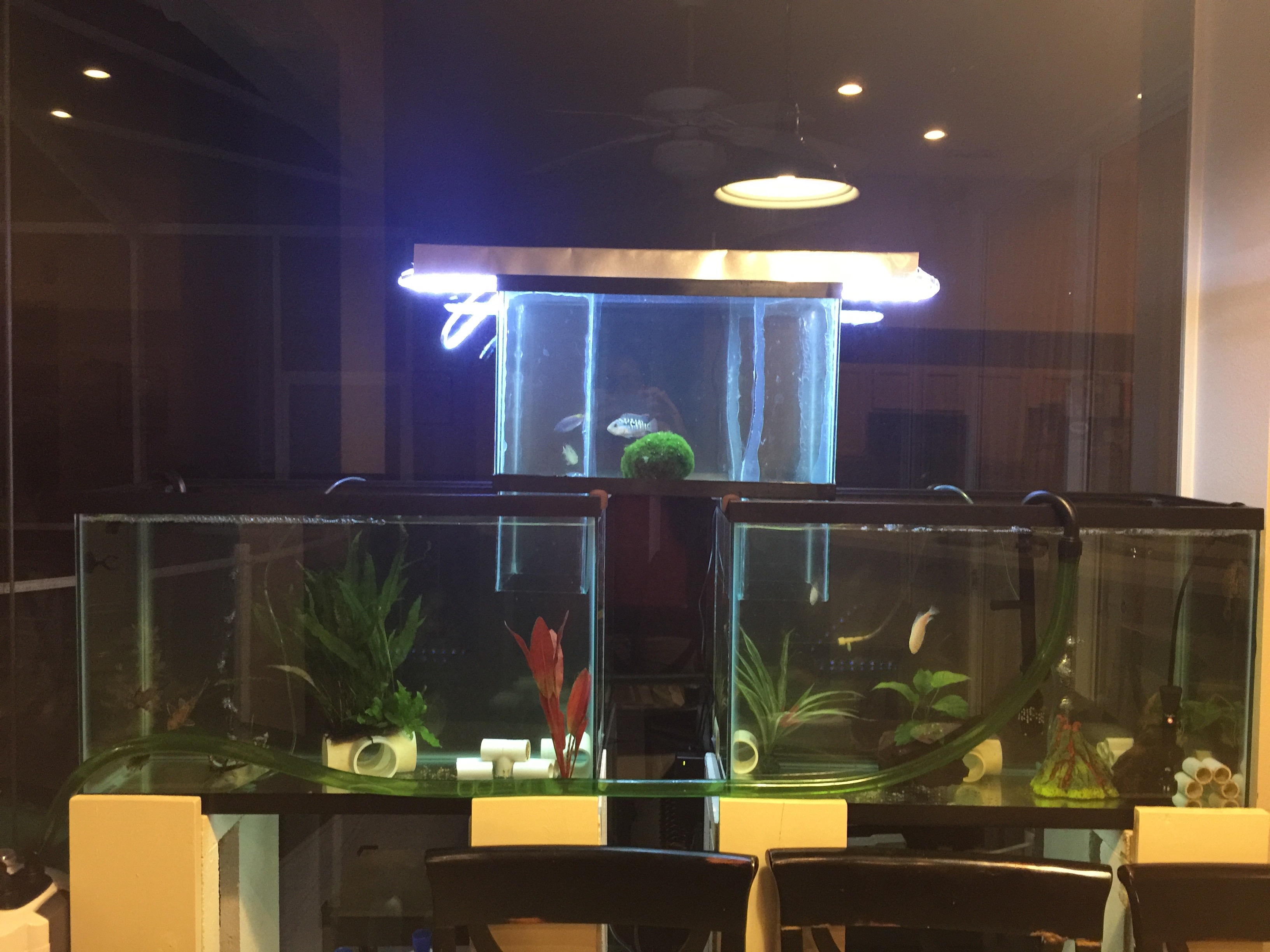 My first aquarium at night with fish in bridge for First fish tank