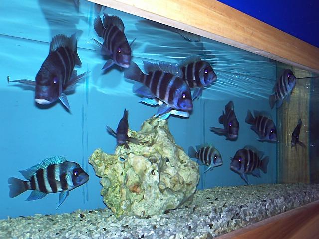 Wild Fish : 01_wild_fish_020.jpg
