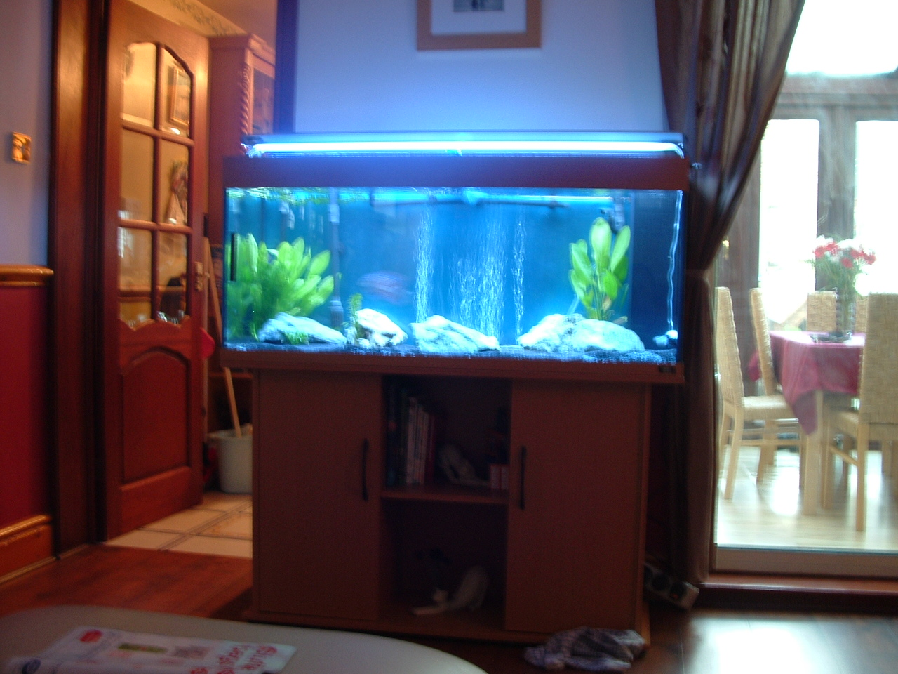 Tank examples discus for Fish tank sizes