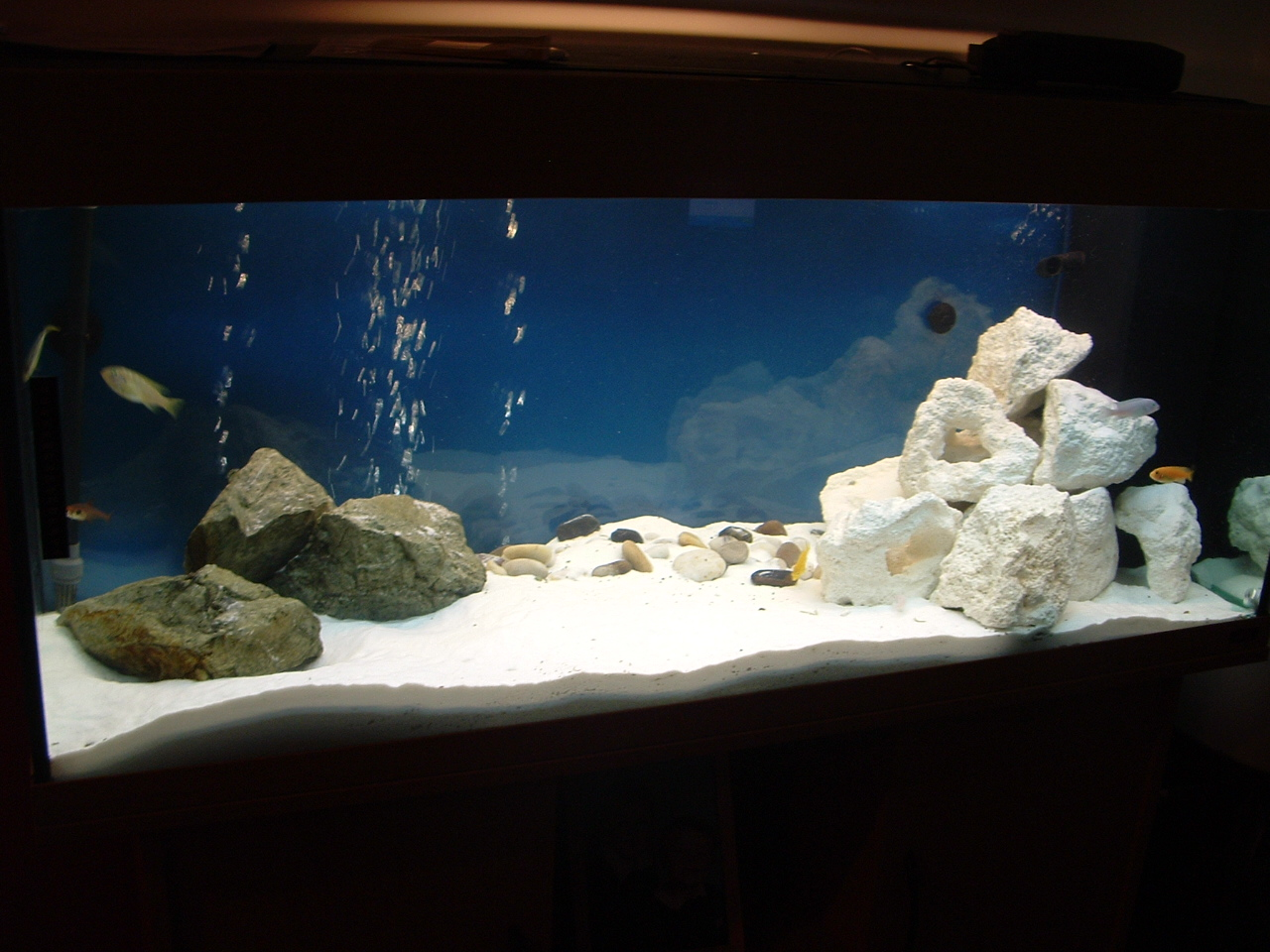 Tank examples east african cichlid tank soon for African cichlid rock decoration