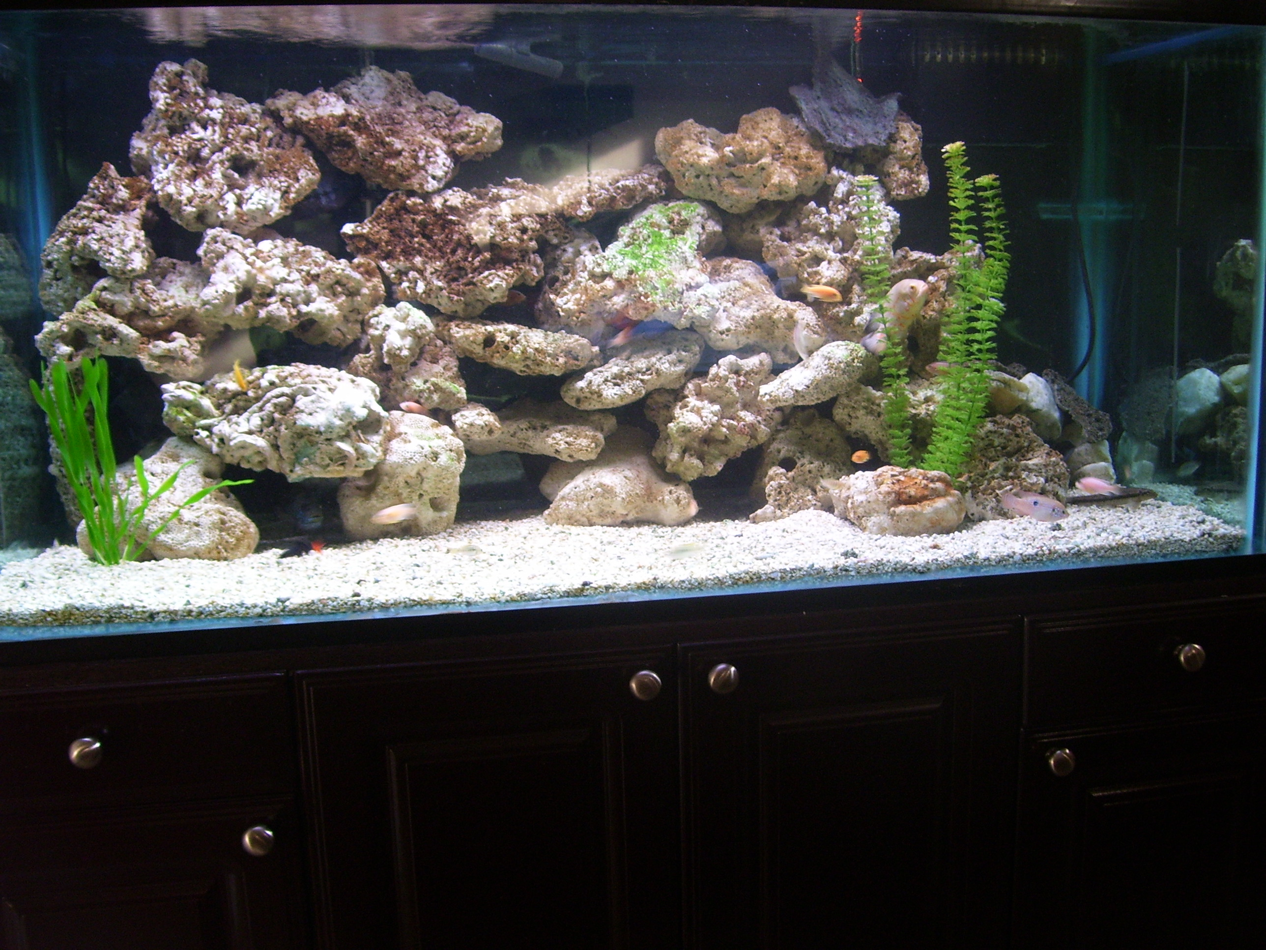 Tank examples mixed cichlids 170 gallon for African cichlid tank decoration