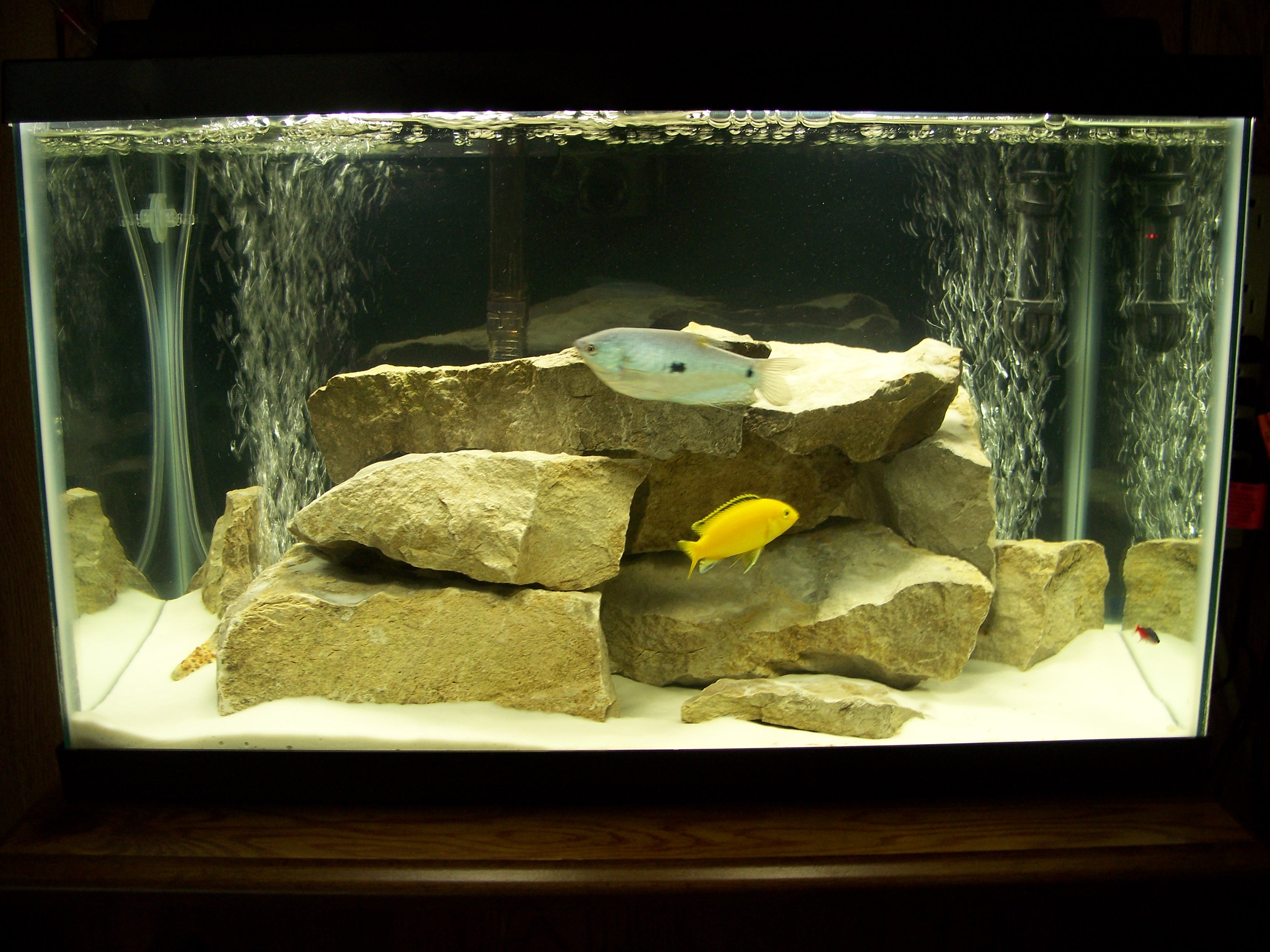 10 gallon fish tank in litres 10 gallon tank my 32. Black Bedroom Furniture Sets. Home Design Ideas
