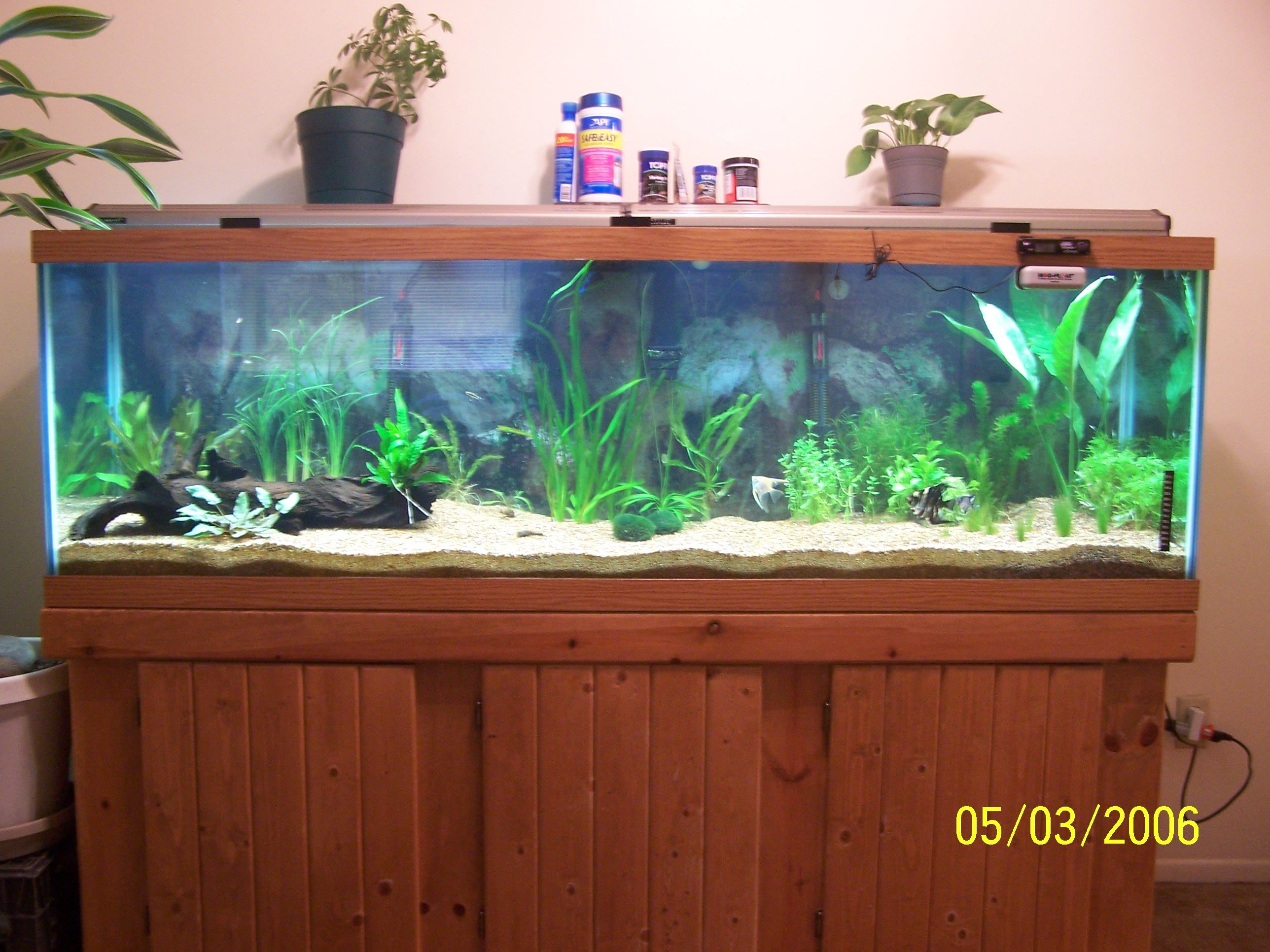 Tank examples my 125 gal planted tank for 125 gallon fish tank