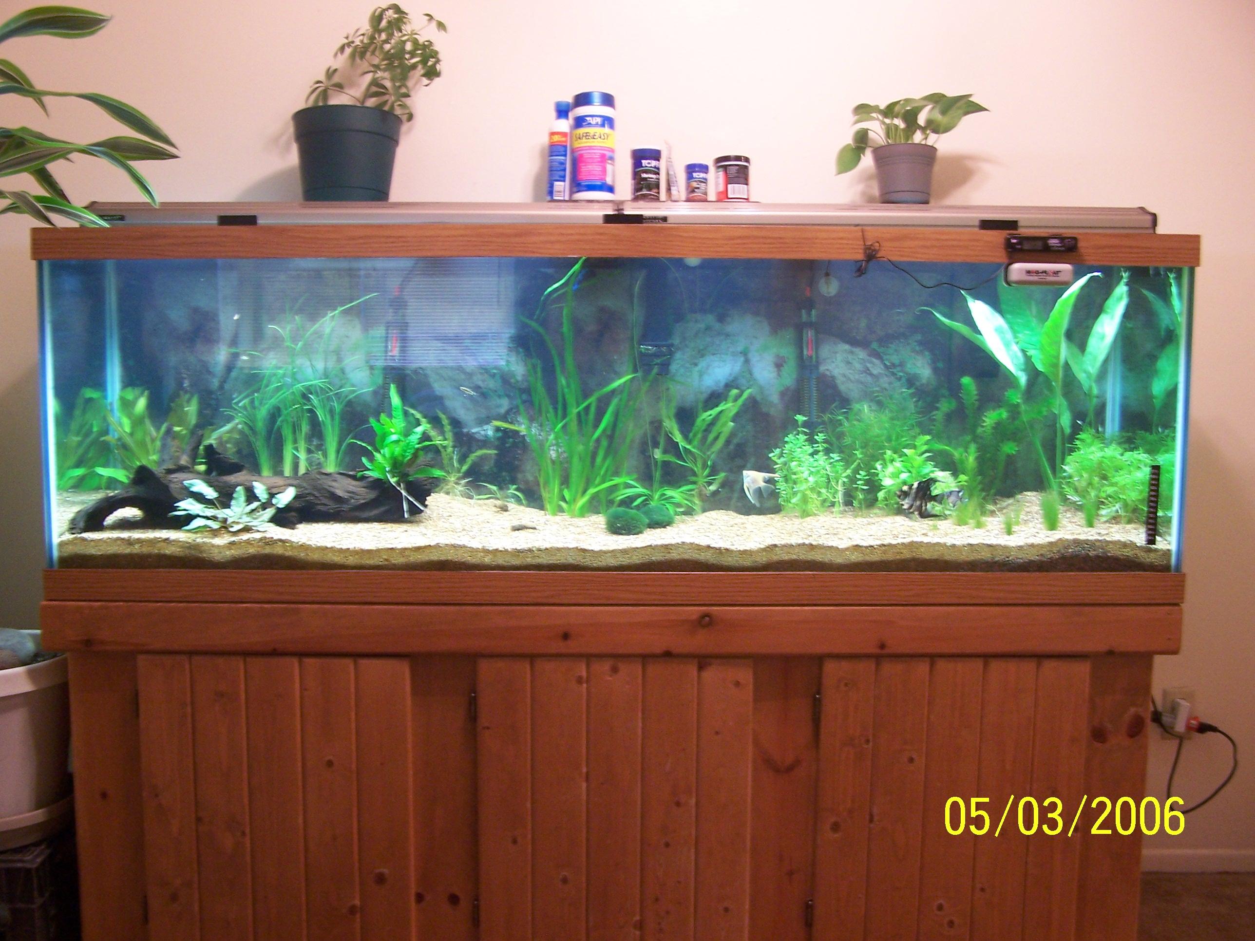cichlids.com: Tank examples: my 125 gal. planted tank