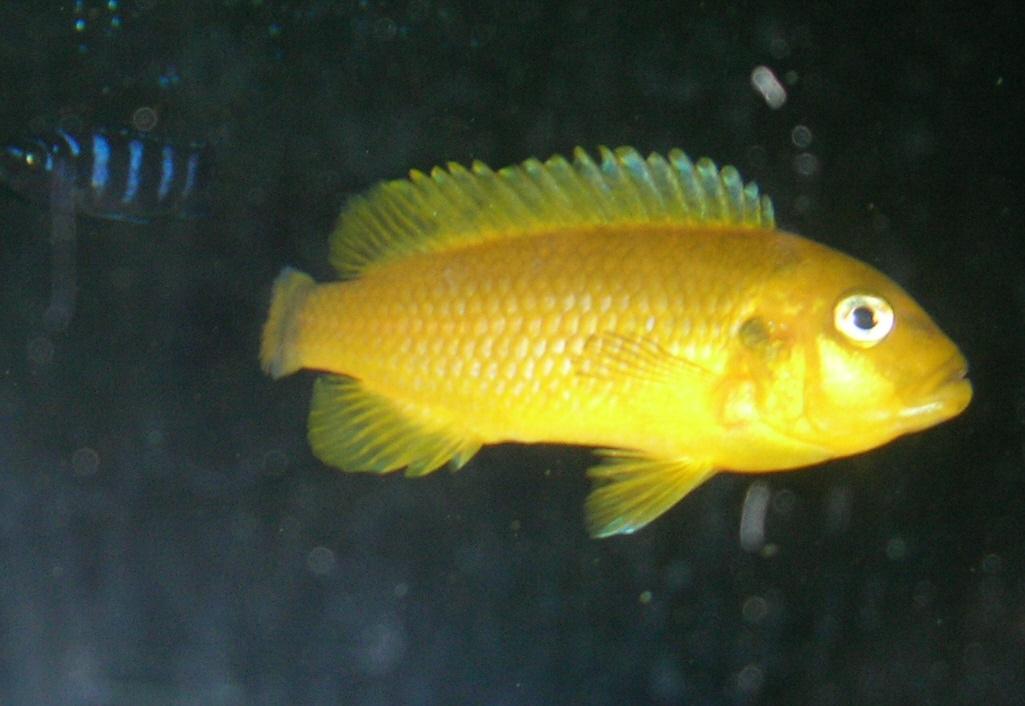 My most aggressive fish for Non aggressive fish