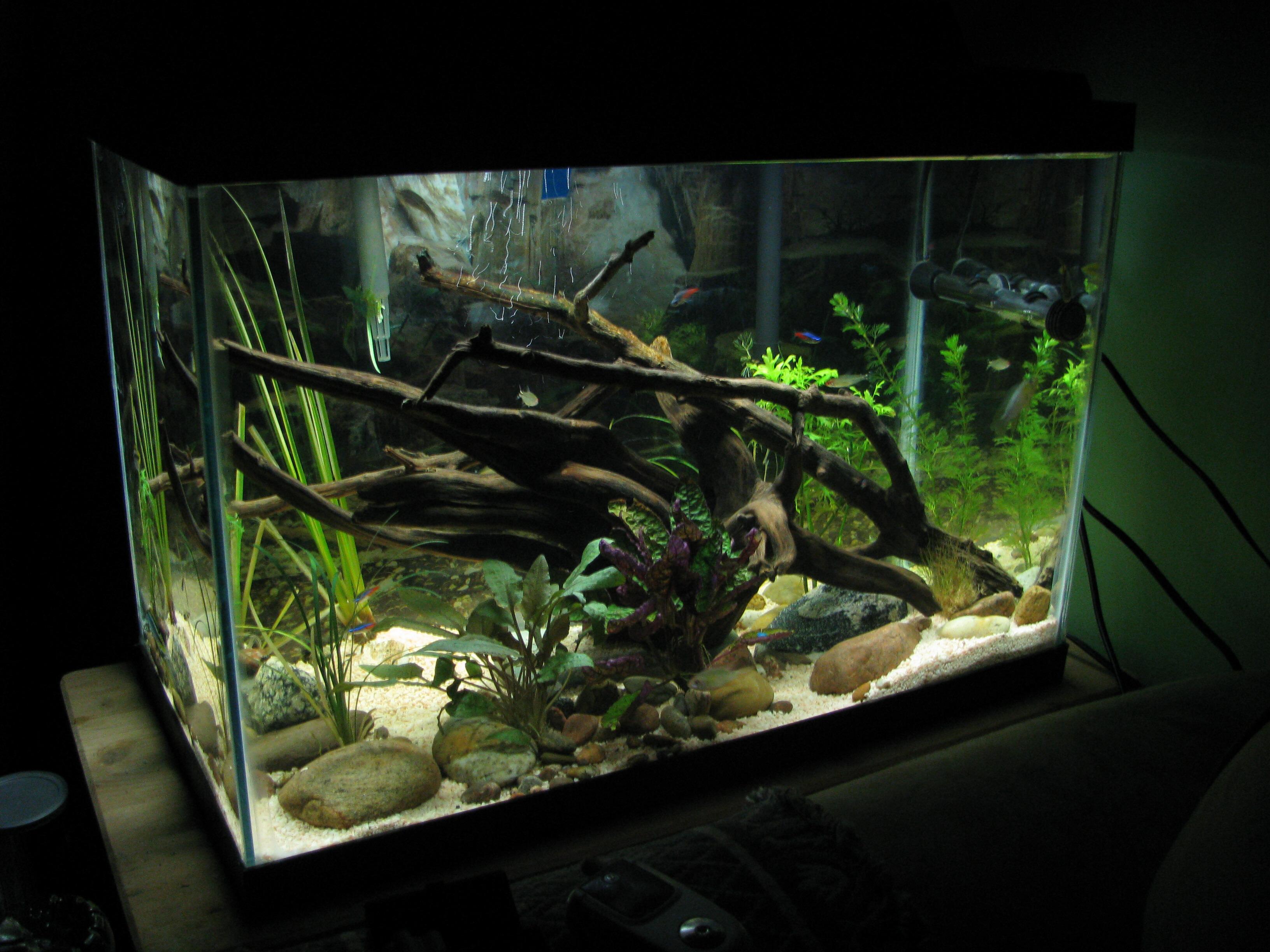 cichlids.com: apisto tank