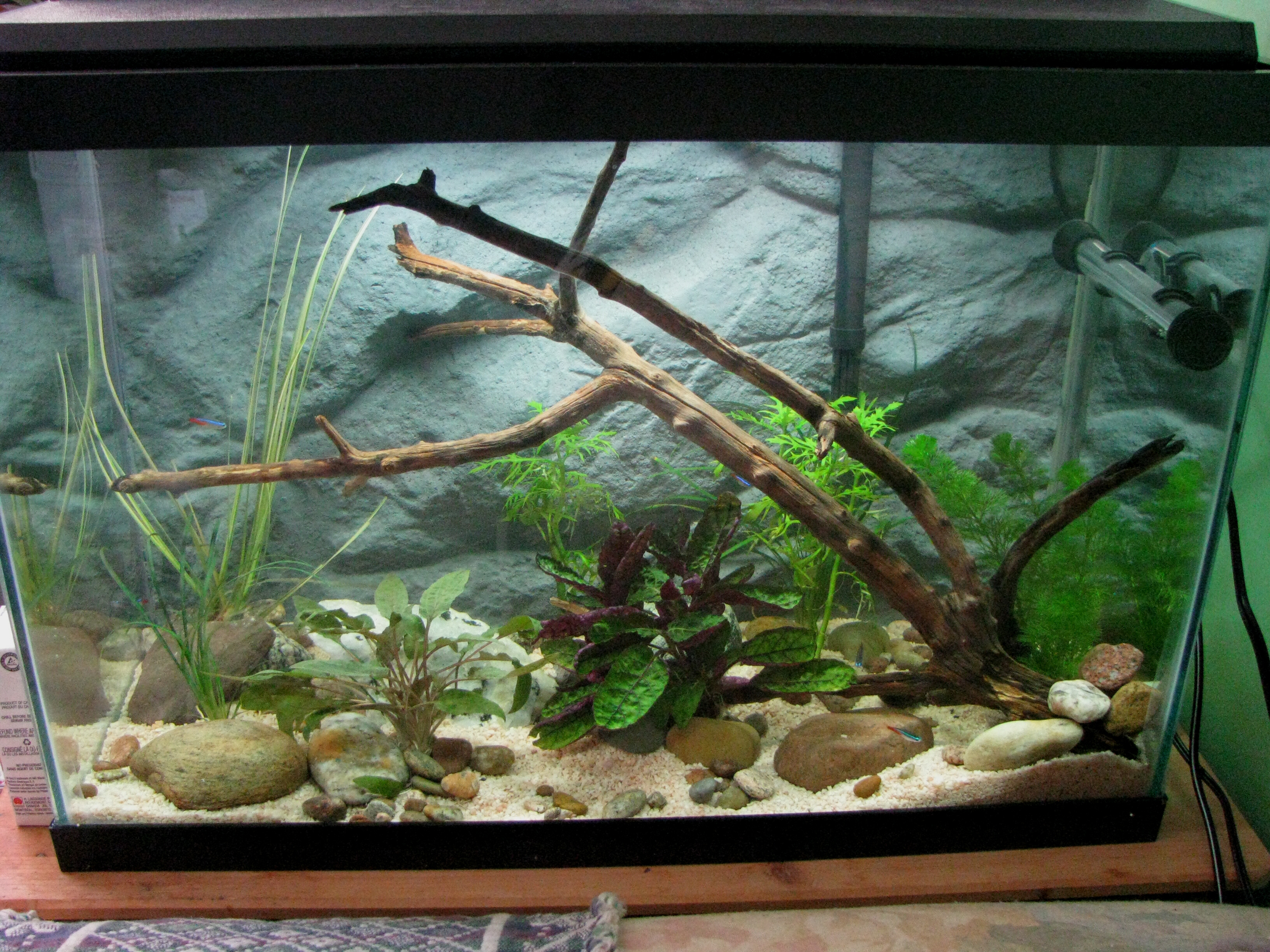 cichlids com  planted tank