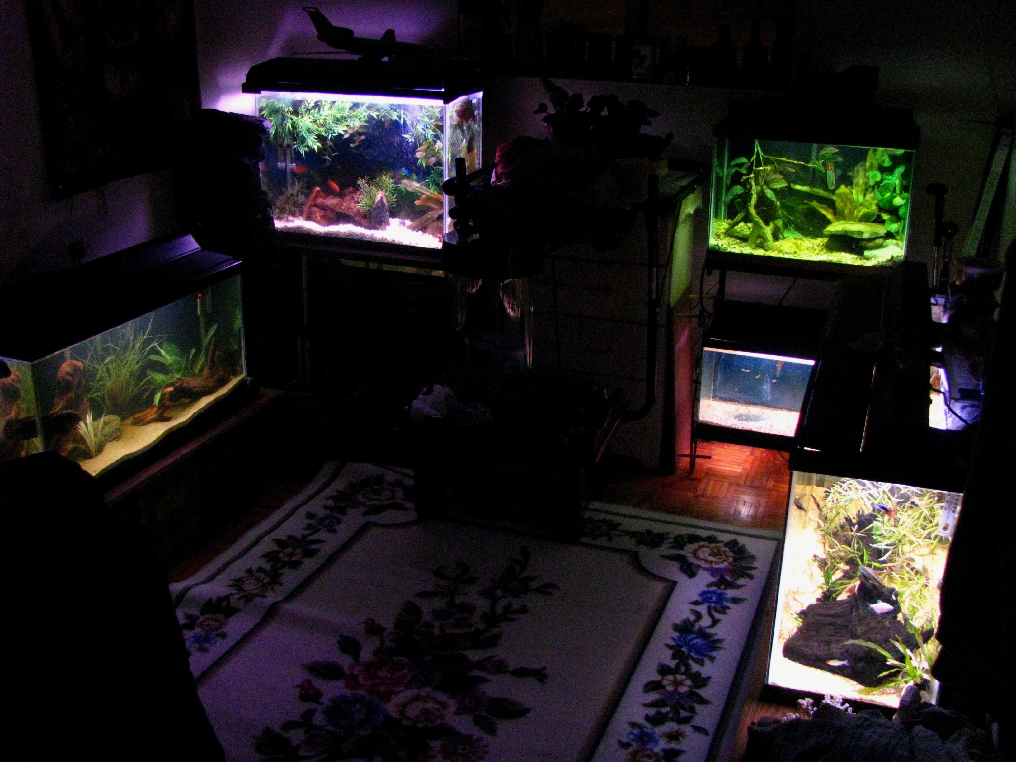cichlids com  fish room