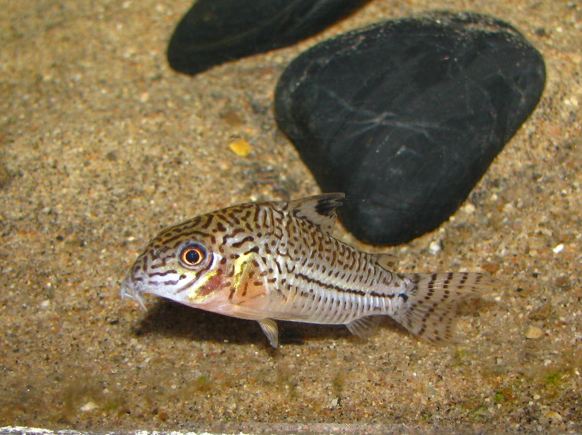 cichlids.com: false julie cory