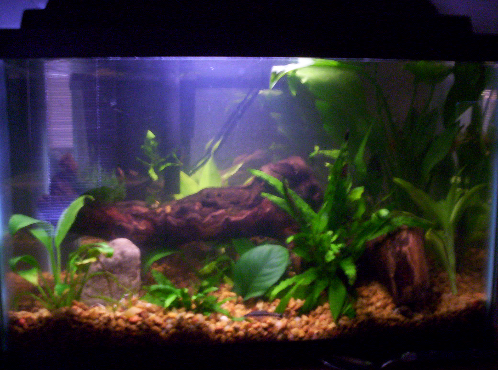 3 fish in 10 gallon tank got giveaways 3 29 two of a for 10 gallon fish tanks
