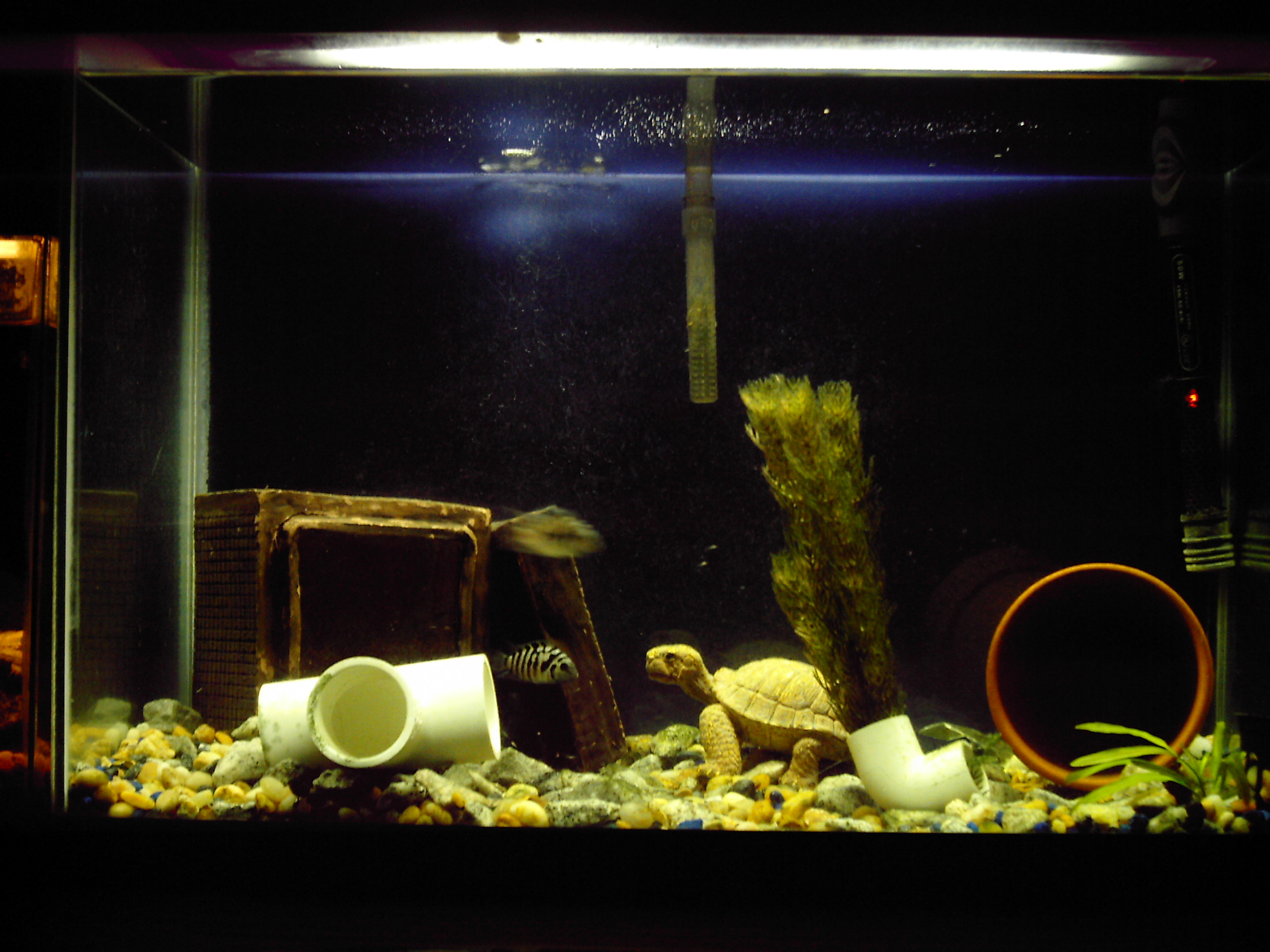 20 gallon tank in cm tank examples 20 for 20 gallon fish tank dimensions