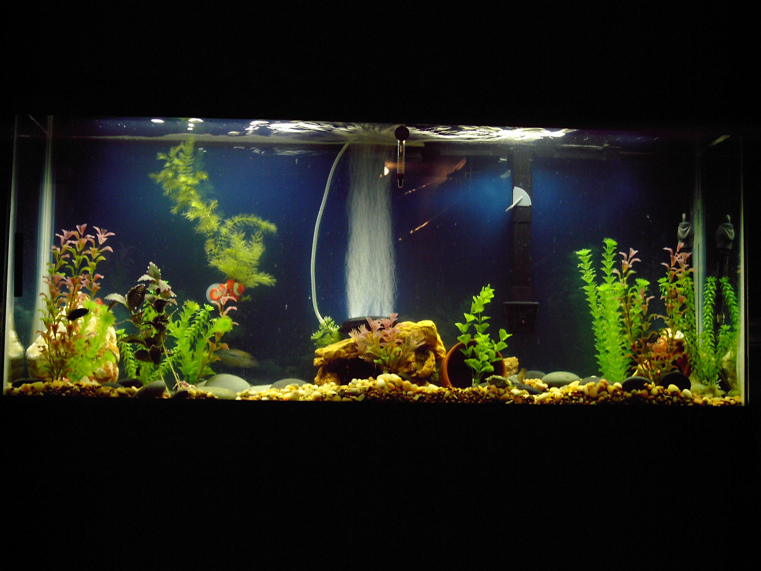 55 gallon for Fish tank divider 55 gallon