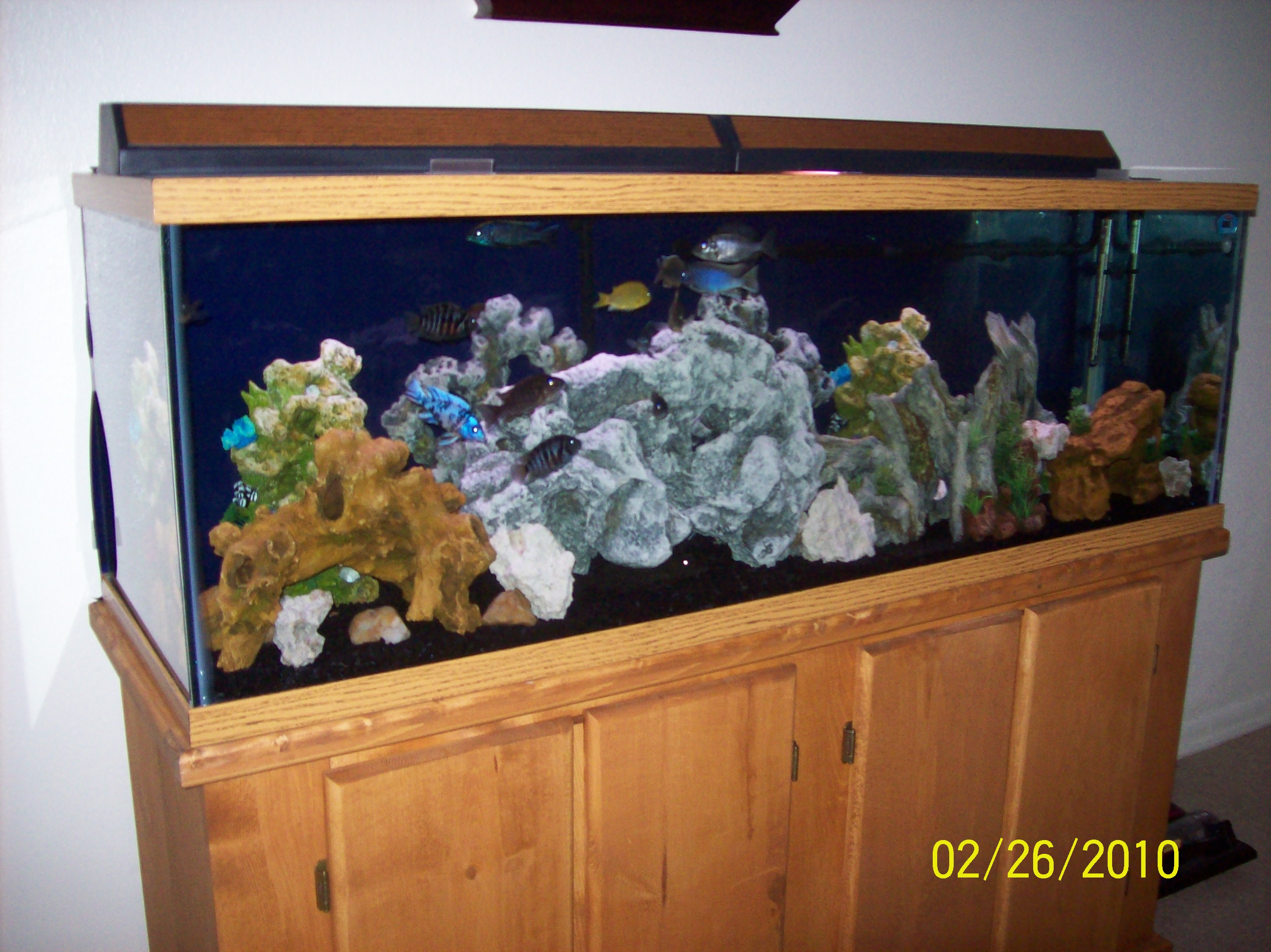 100 gallon fish tank dimensions 100 gallon tank with big
