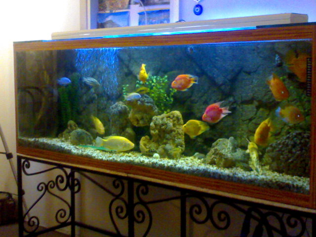 how to set up a mexican walking fish tank