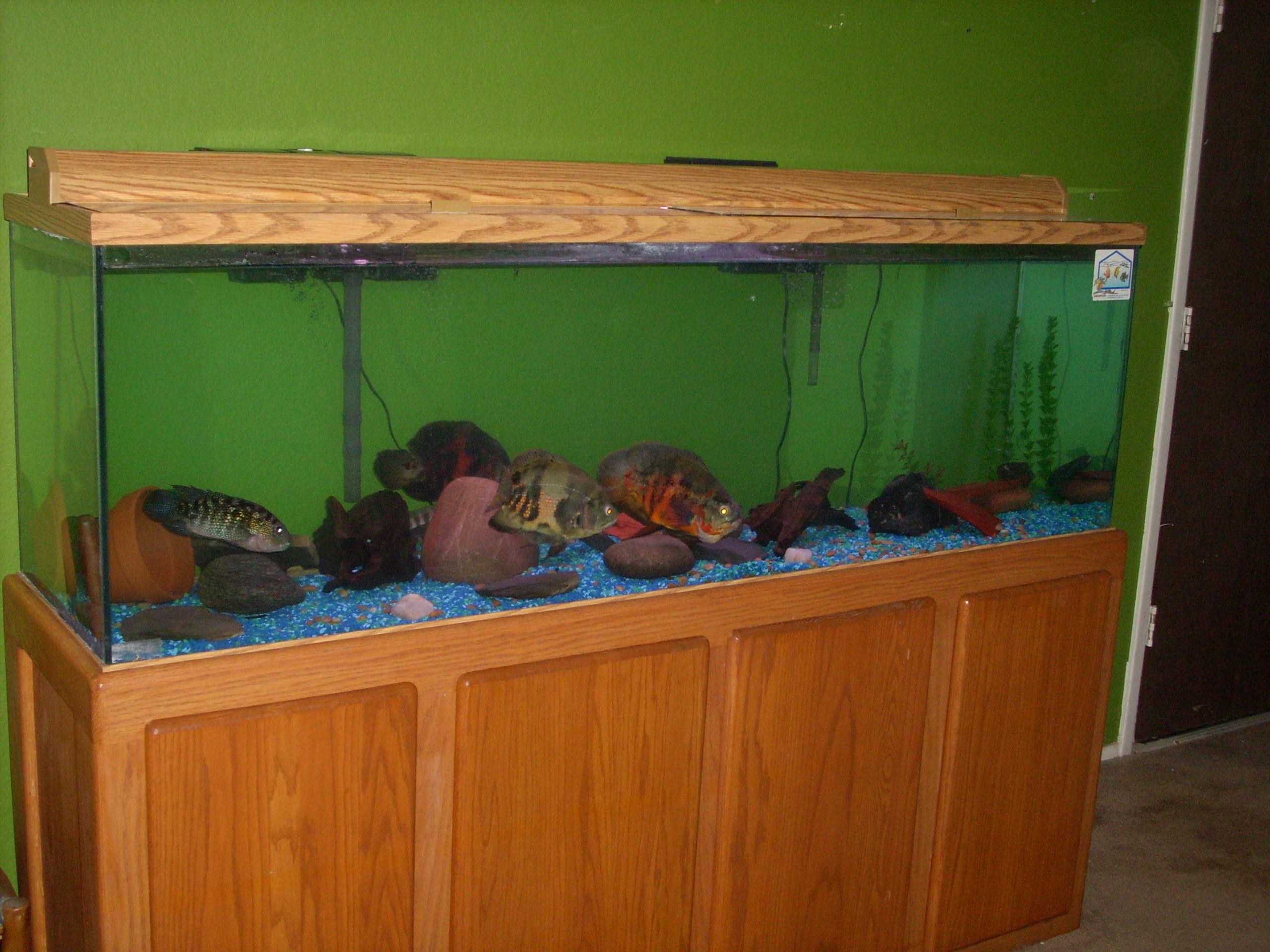 Tank examples 125 gallon oscar tank for 125 gallon fish tank