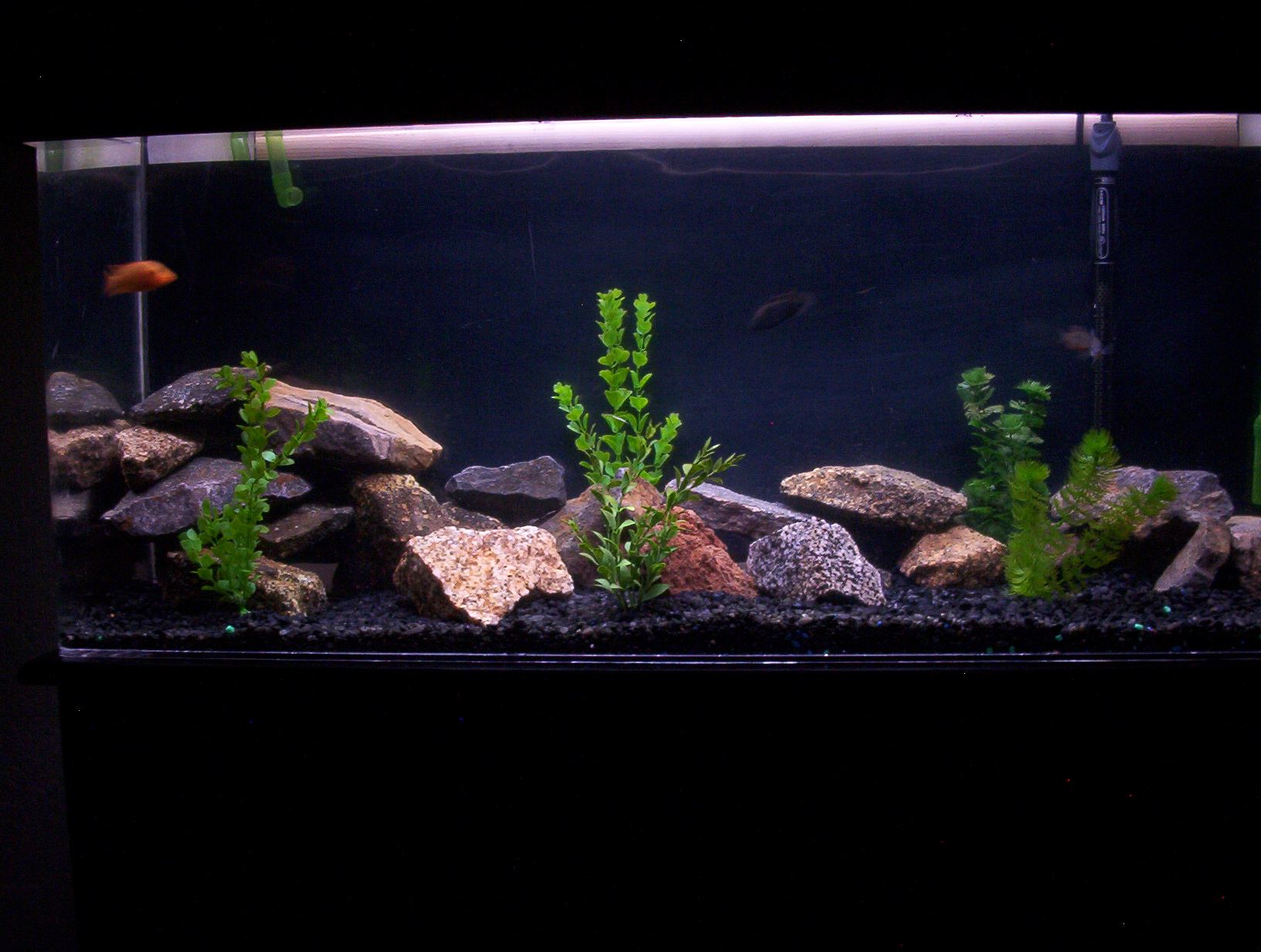 50 gallon south american tank for 50 gallon fish tank