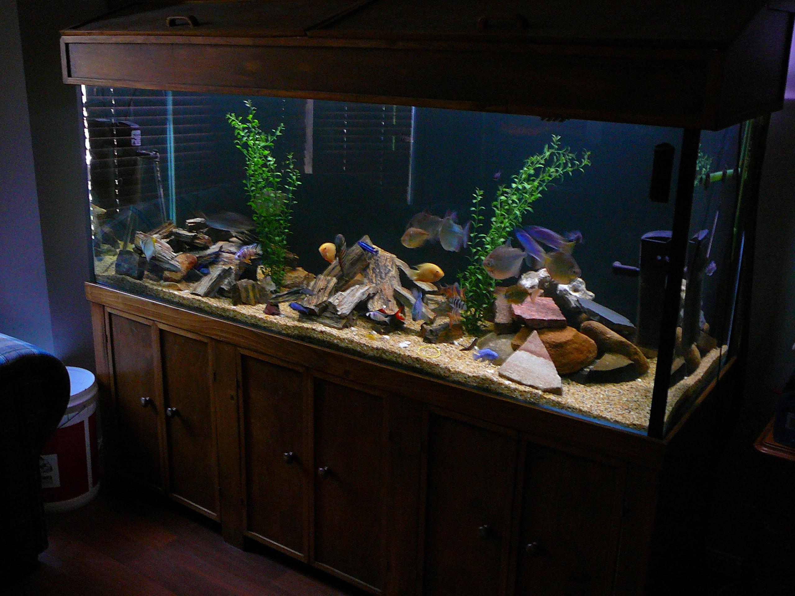Freshwater aquarium fish brisbane - Main Tank
